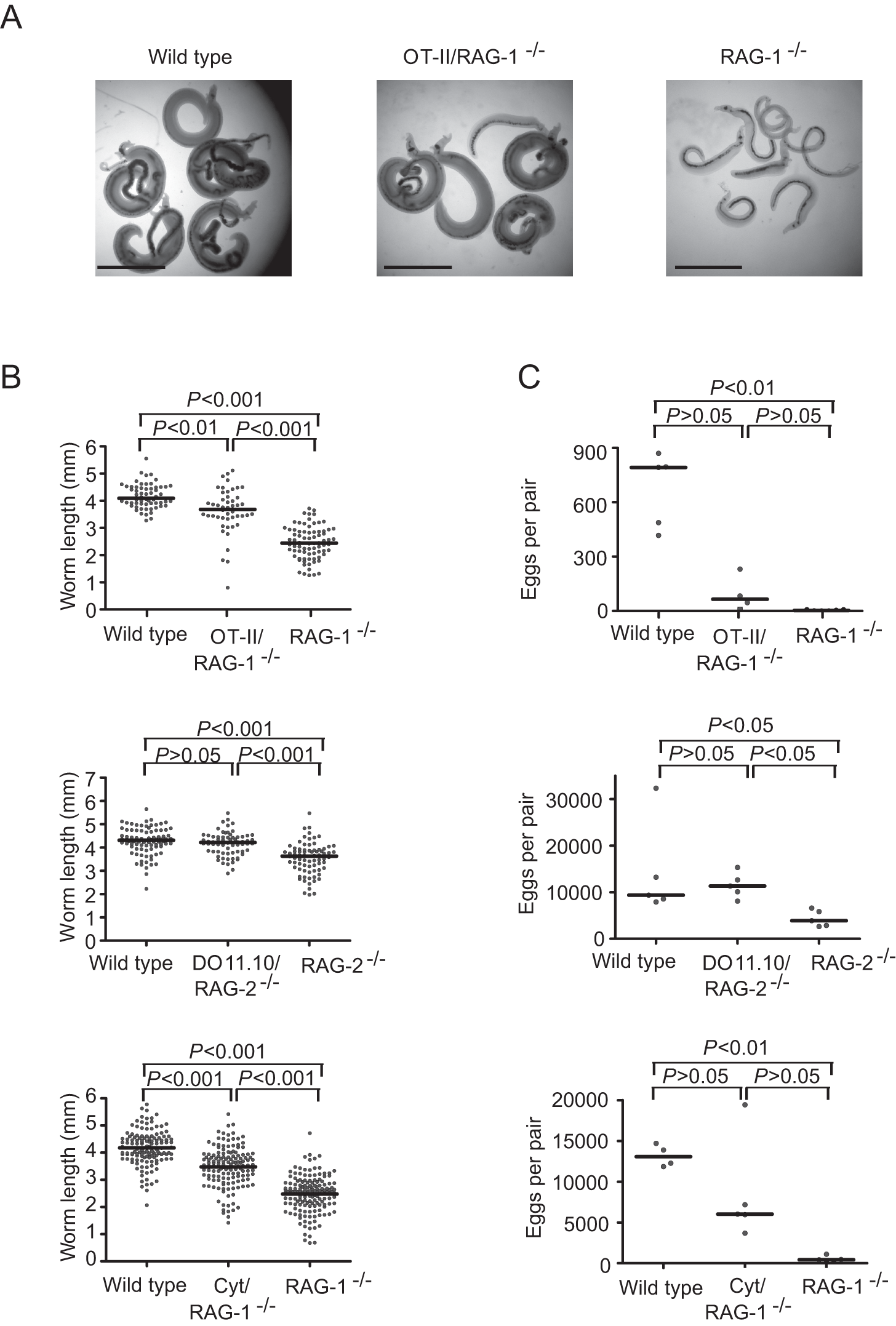 Recognition of schistosome antigens by CD4<sup>+</sup> T cells is dispensable for <i>S. mansoni</i> development.