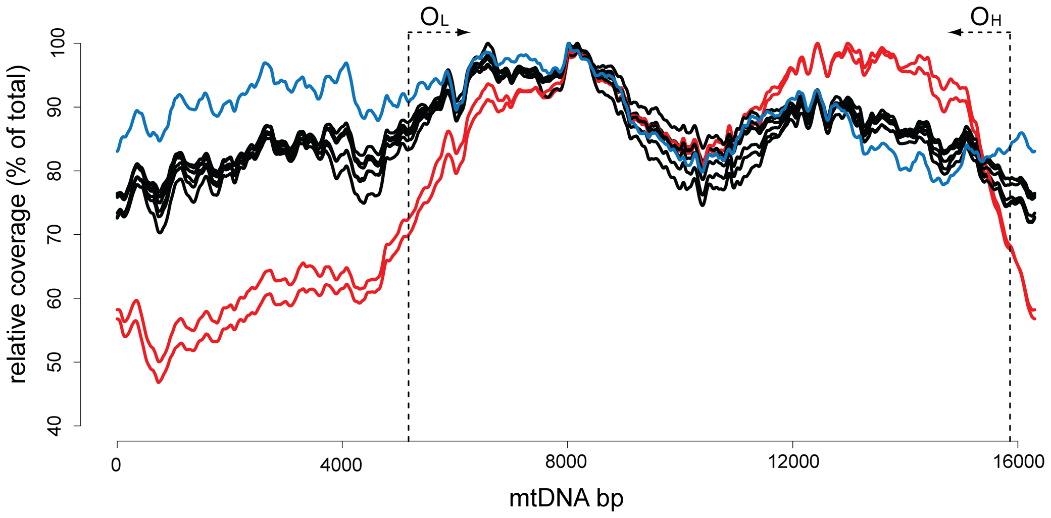 Sequence coverage for the mouse mtDNA samples.