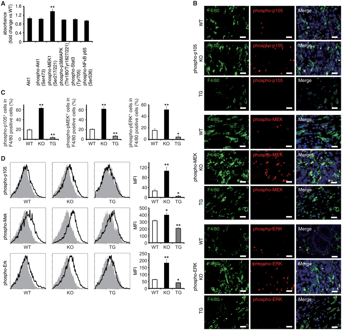 EPRAP inhibits p105 phosphorylation and MEK–ERK activation in stromal macrophages with DSS treatment.