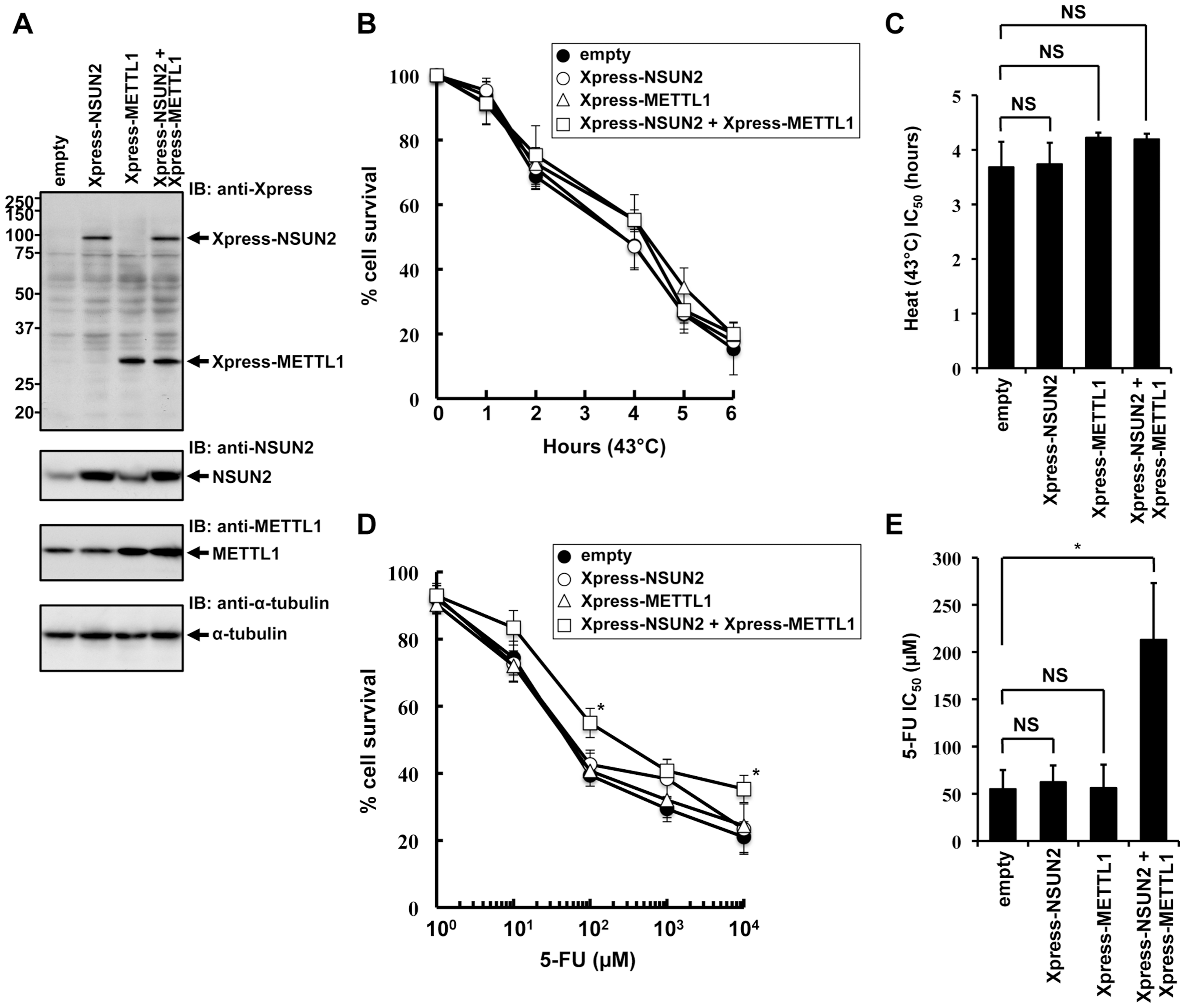 Effects of increased expression of NSUN2 and METTL1 on 5-FU-treatment and heat stress and 5-FU.