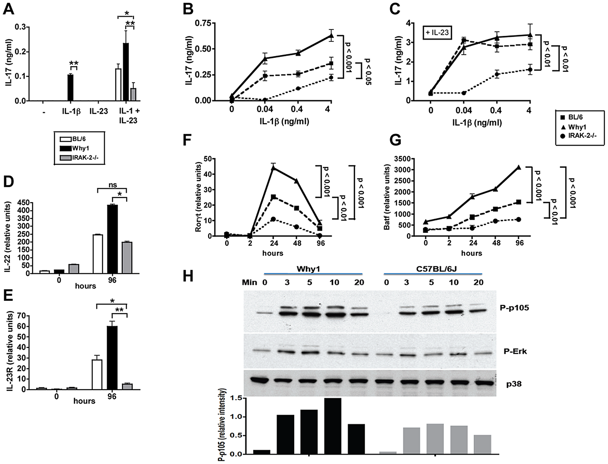 IRAK-2 promotes CD4 T cell IL-17 production and Th17 lineage commitment and activation.