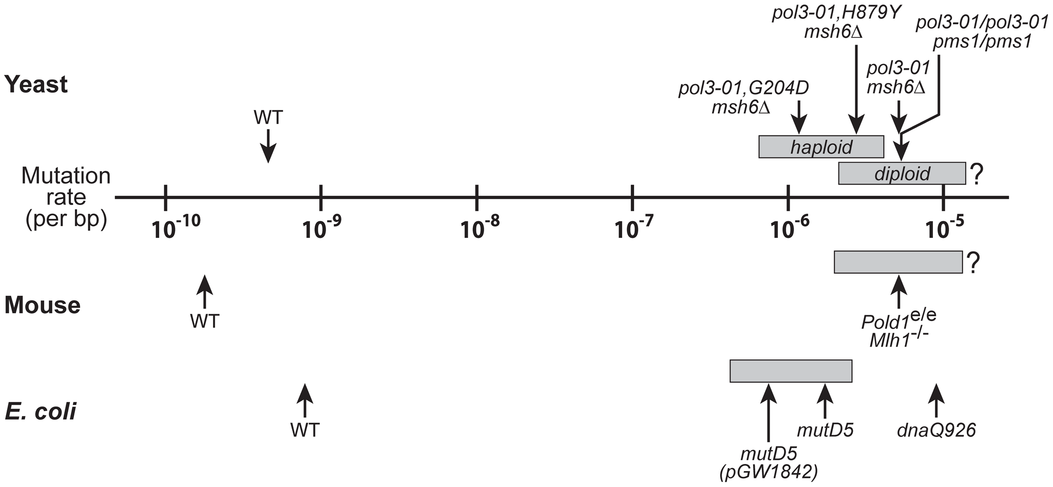 Mutational robustness of yeast, <i>E. coli</i>, and mice.
