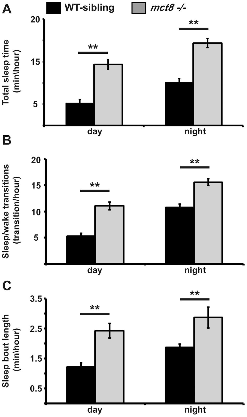 Sleep architecture of <i>mct8−/−</i> larvae.