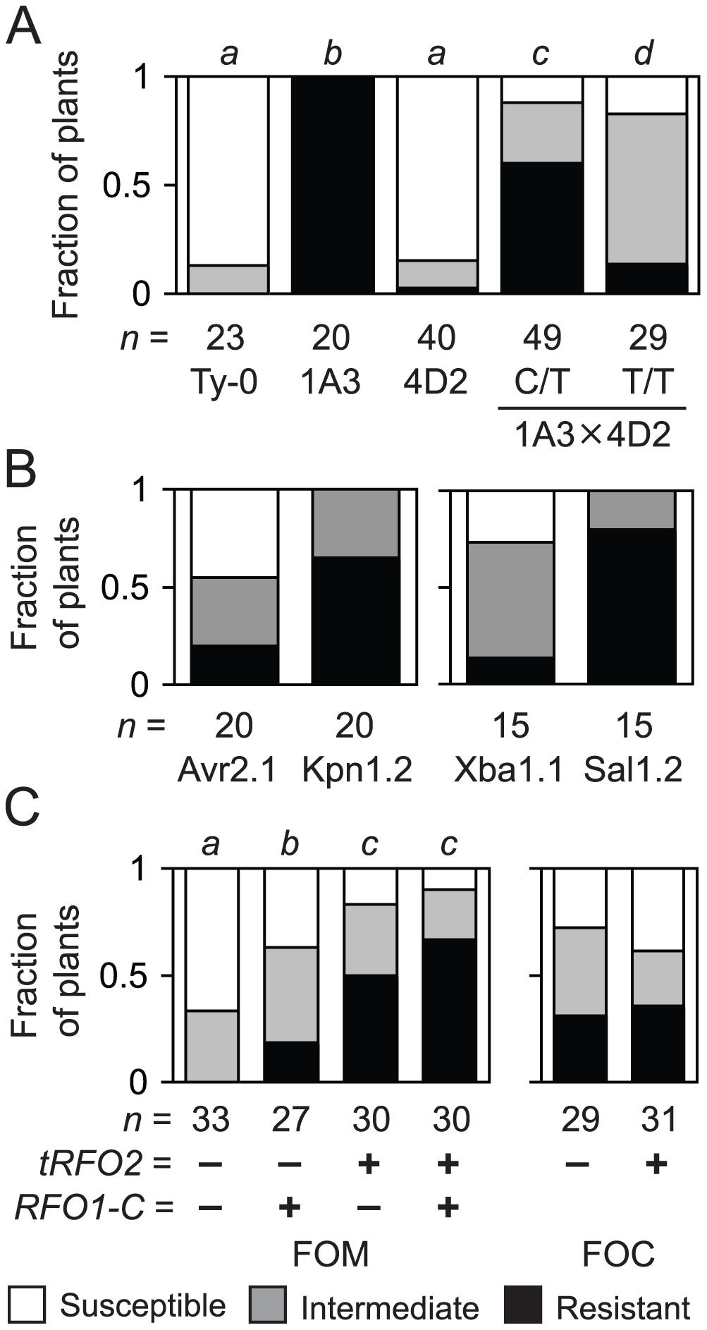 Resistance of endogenous and transgenic <i>RFO2</i>.