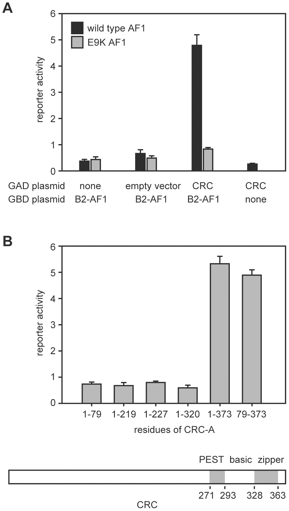 Interaction of the EcR-B2 N-terminus with CRC in yeast two-hybrid assay.