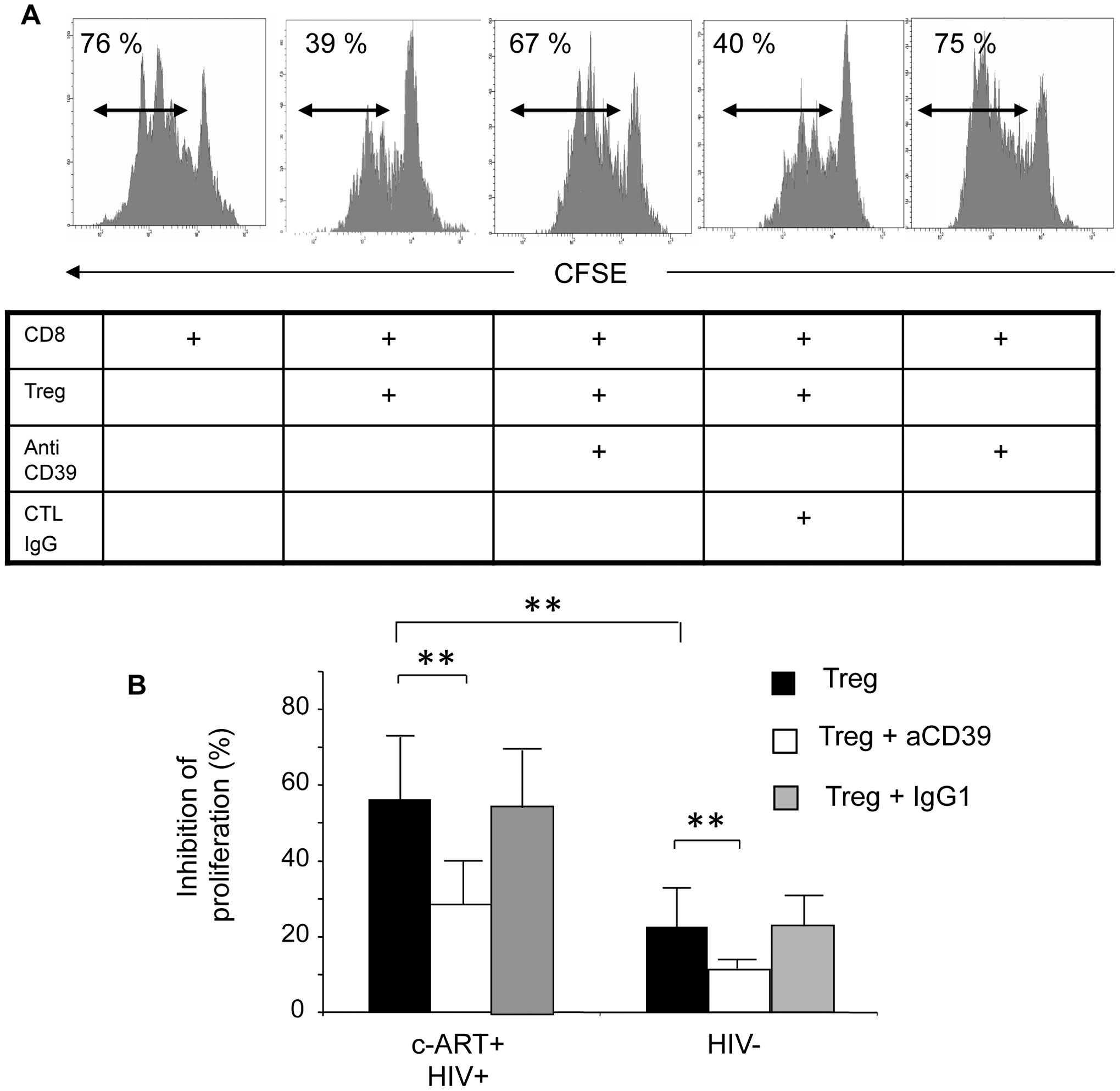 CD39 blocking mAb reverses the suppressive effect of Treg on the proliferation of anti-CD3 stimulated CD8+ T cells.