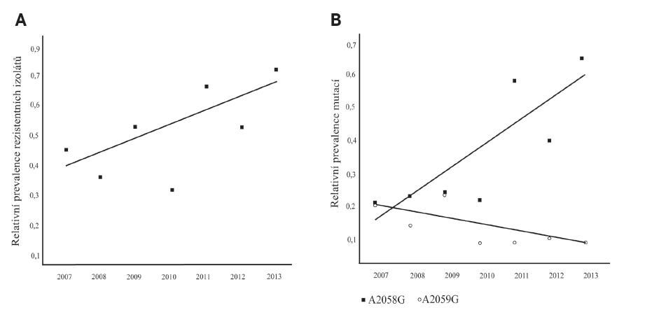 Prevalence rezistentních izolátů a prevalence mutace A2058G a A2059G ve 23S rRNA genech TPA kmenů v ČR v letech 2007–2013 Spojnice trendu byla vytvořena pomocí programu MS Excel 2003. Fig. 3. Prevalence of resistant isolates and prevalence of A2058G and A2059G mutations in the 23S rRNA genes of TPA strains in the Czech Republic in 2007–2013 The trend connecting line was generated using the MS Excel 2003 software.