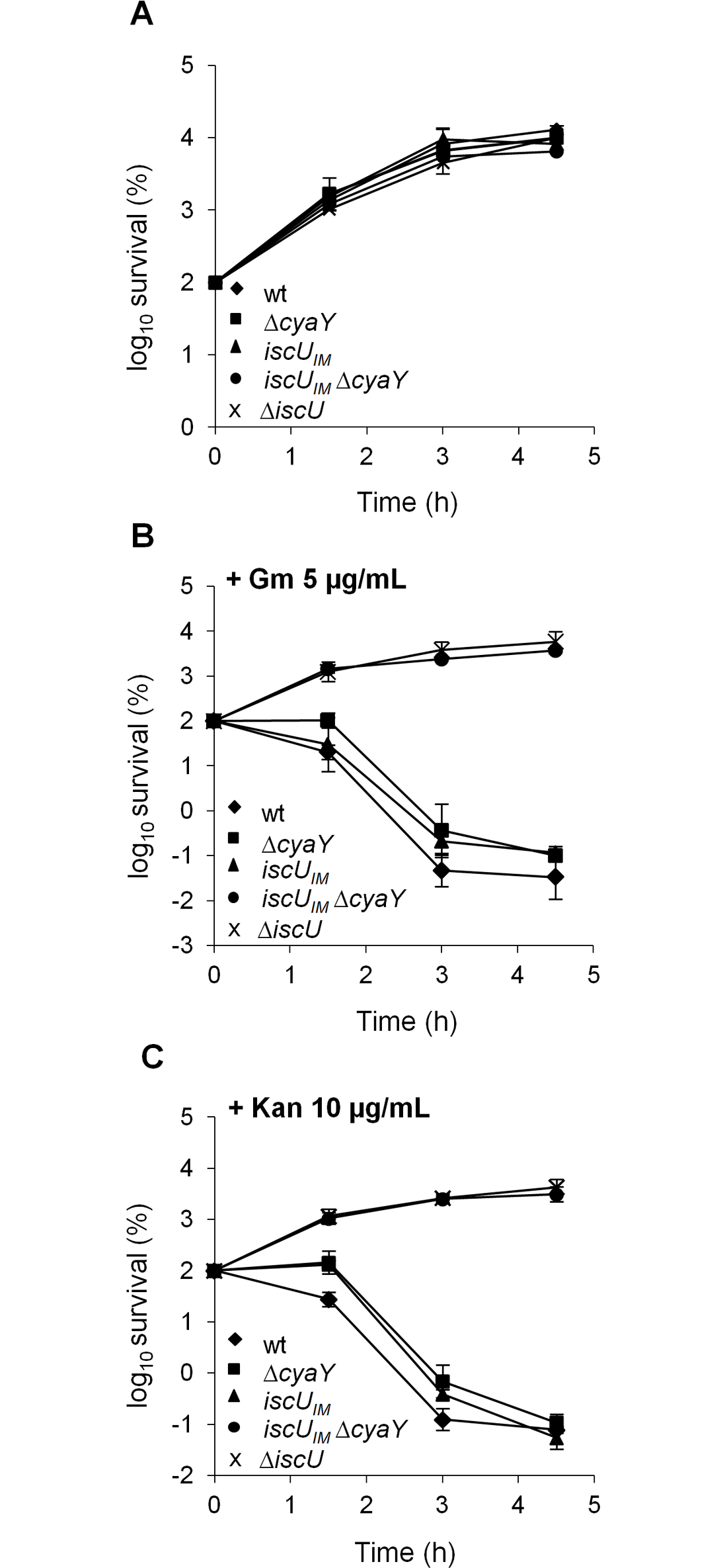 The <i>iscU</i><sub><i>IM</i></sub> Δ<i>cyaY</i> strain is resistant to aminoglycosides.