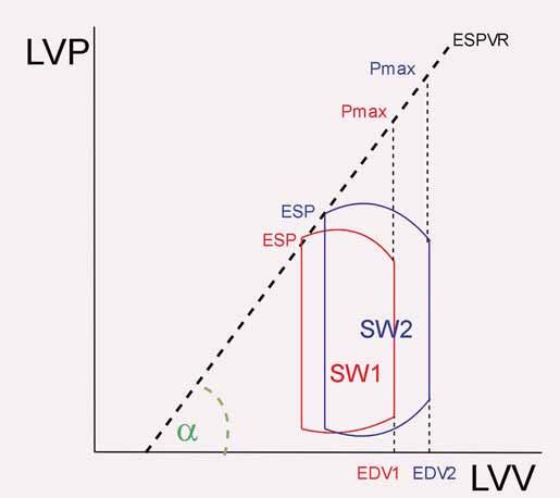 Znázornění endsystolické elastance. End-systolic pressure volume relationship (ESPVR) je zjednodušeně (v podobě tzv. lineárního vyjádření) spojnicí maximálního tlaku dosažitelného při čistě izovolumické kontrakci (Pmax) a průsečíku ESP a ESV v průběhu běžného srdečního cyklu. I při různé náplni levé komory se přímka významněji (nikoli ale vůbec) nemění – znázorněny jsou 2 různé cykly. Sklon křivky ESPVR (tg a) se pak nazývá slope of ESPVR.