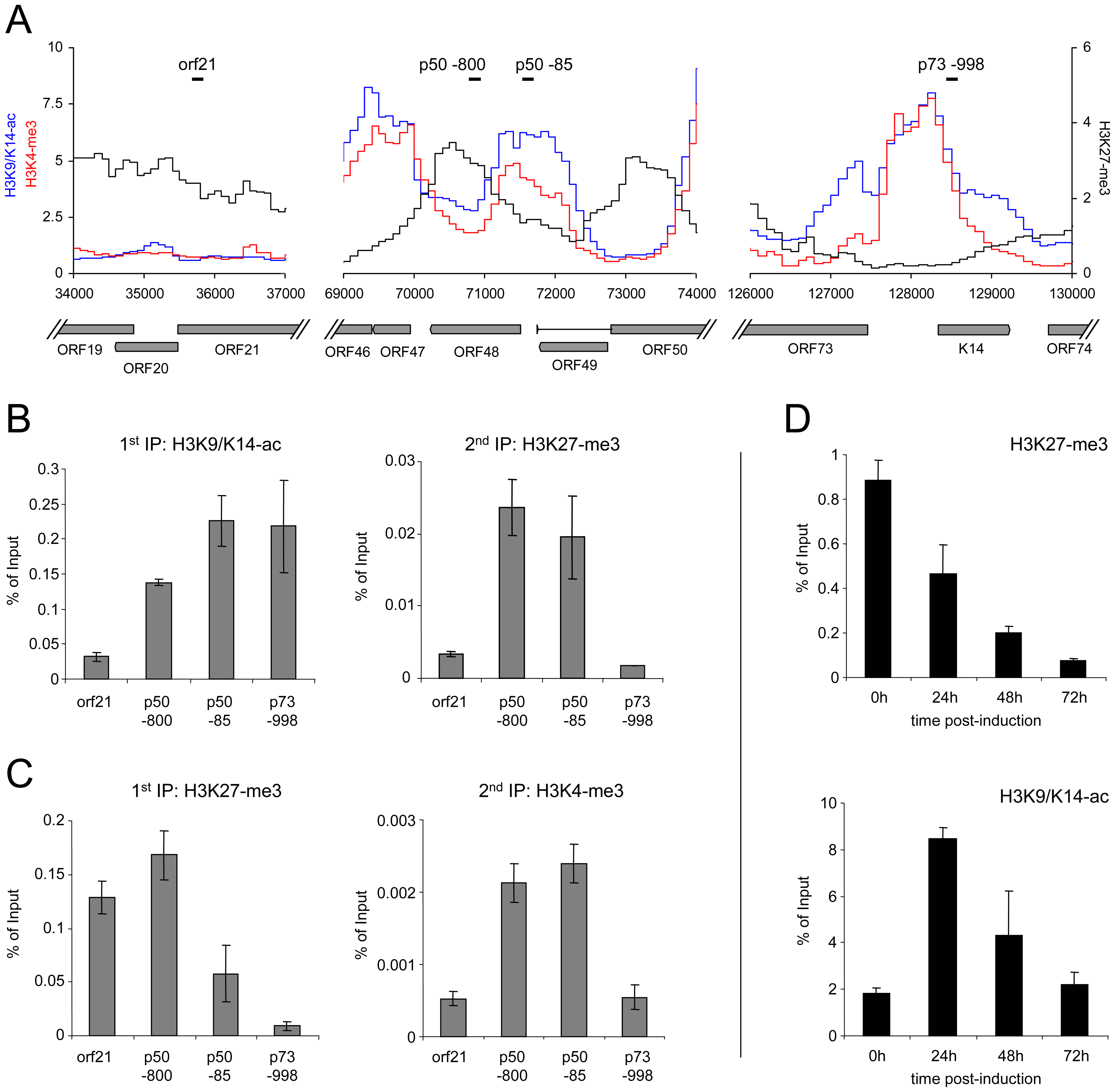 Bivalent histone modification patterns at the ORF50 promoter are reversed upon induction of the lytic cycle.