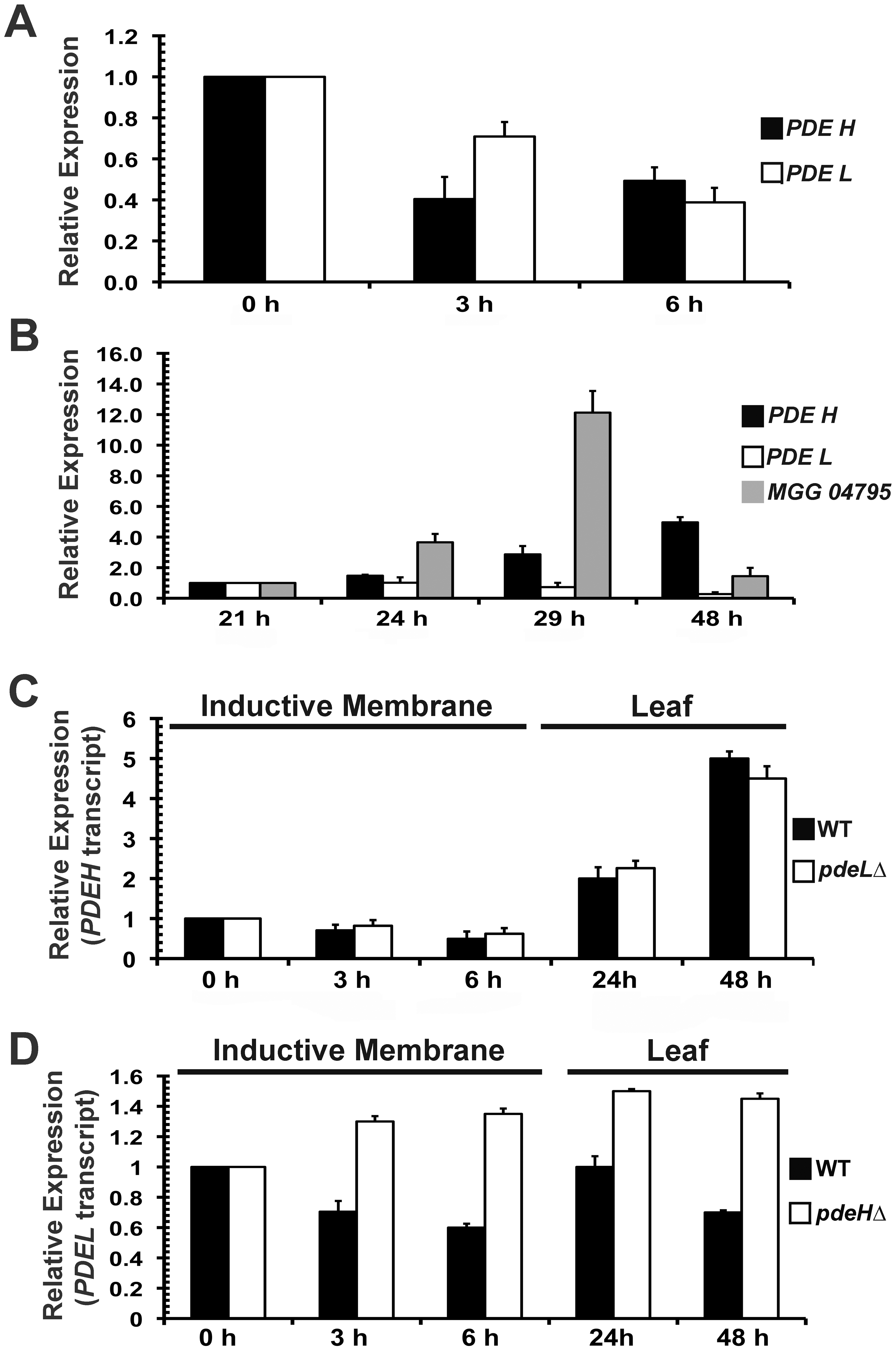 <i>PDEH</i> transcript is differentially regulated during infection-related development.