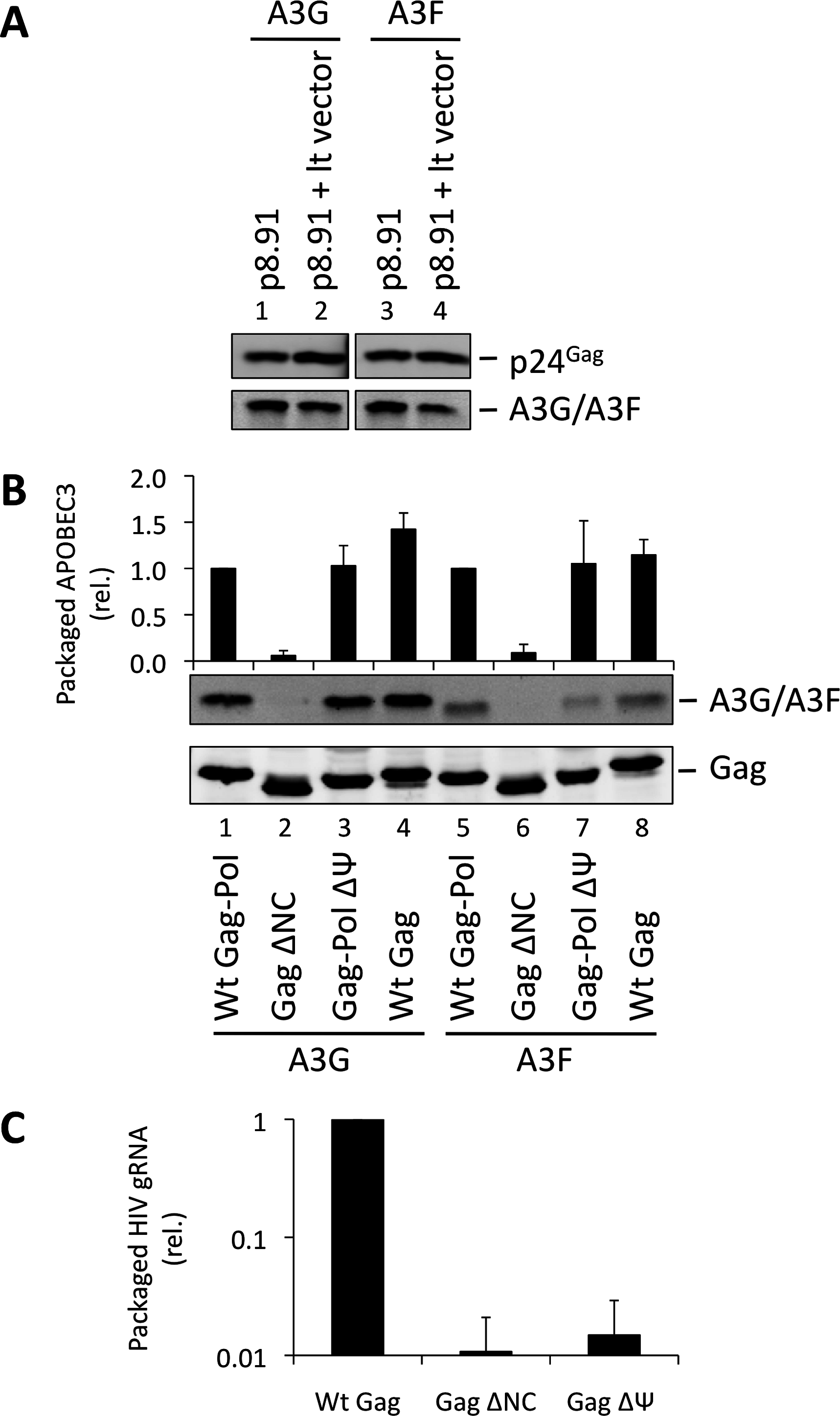 HIV-1 particles lacking genomic RNA package A3G and A3F. (A)
