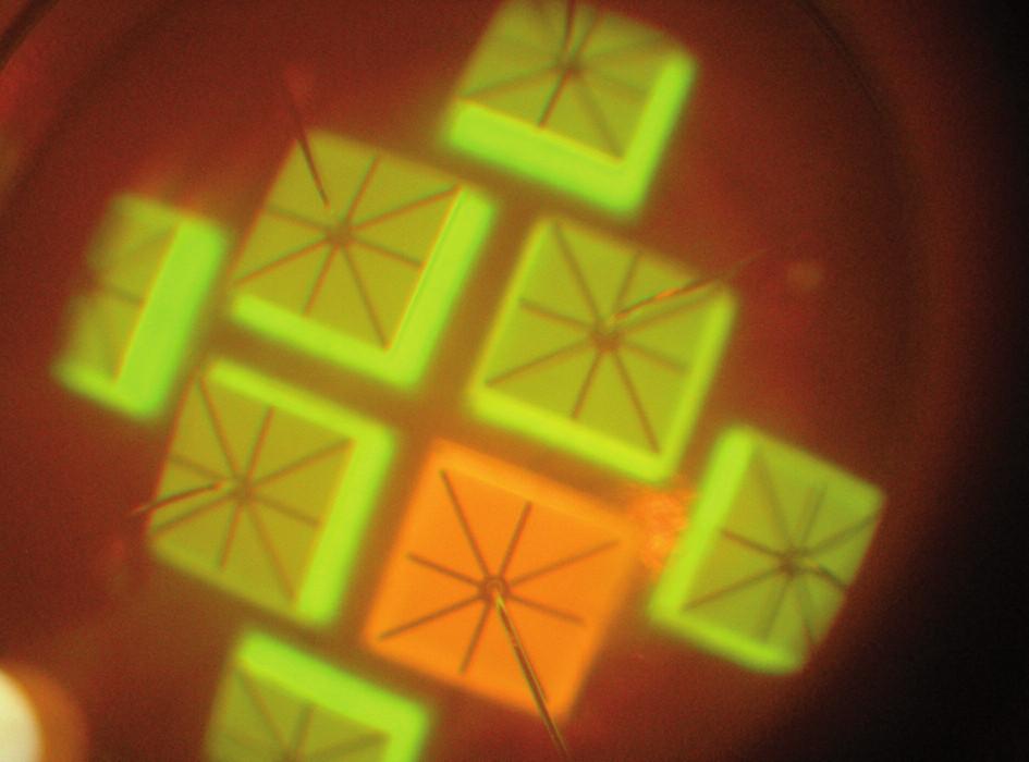 Diodové pole lampy osazené dvěma typy diod s emisí v různých oblastech spektra. Lampa G-Light, oranžový filtr.