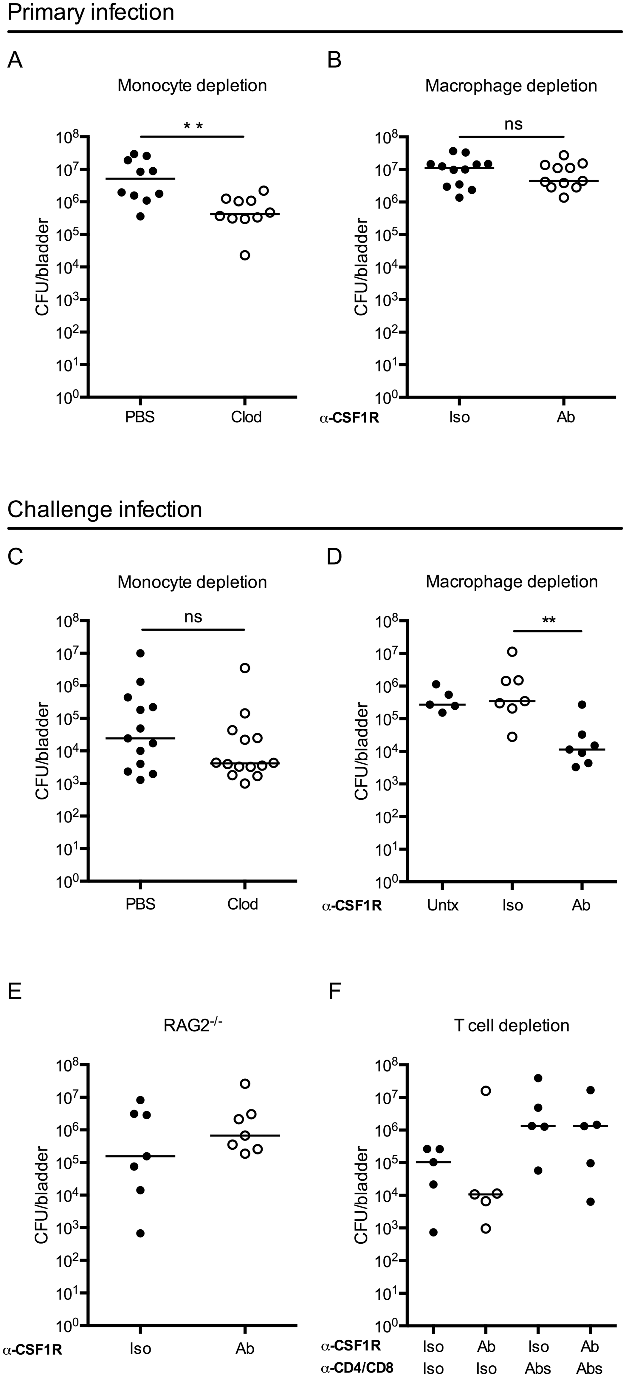 Macrophage depletion improves the adaptive response to UPEC infection.