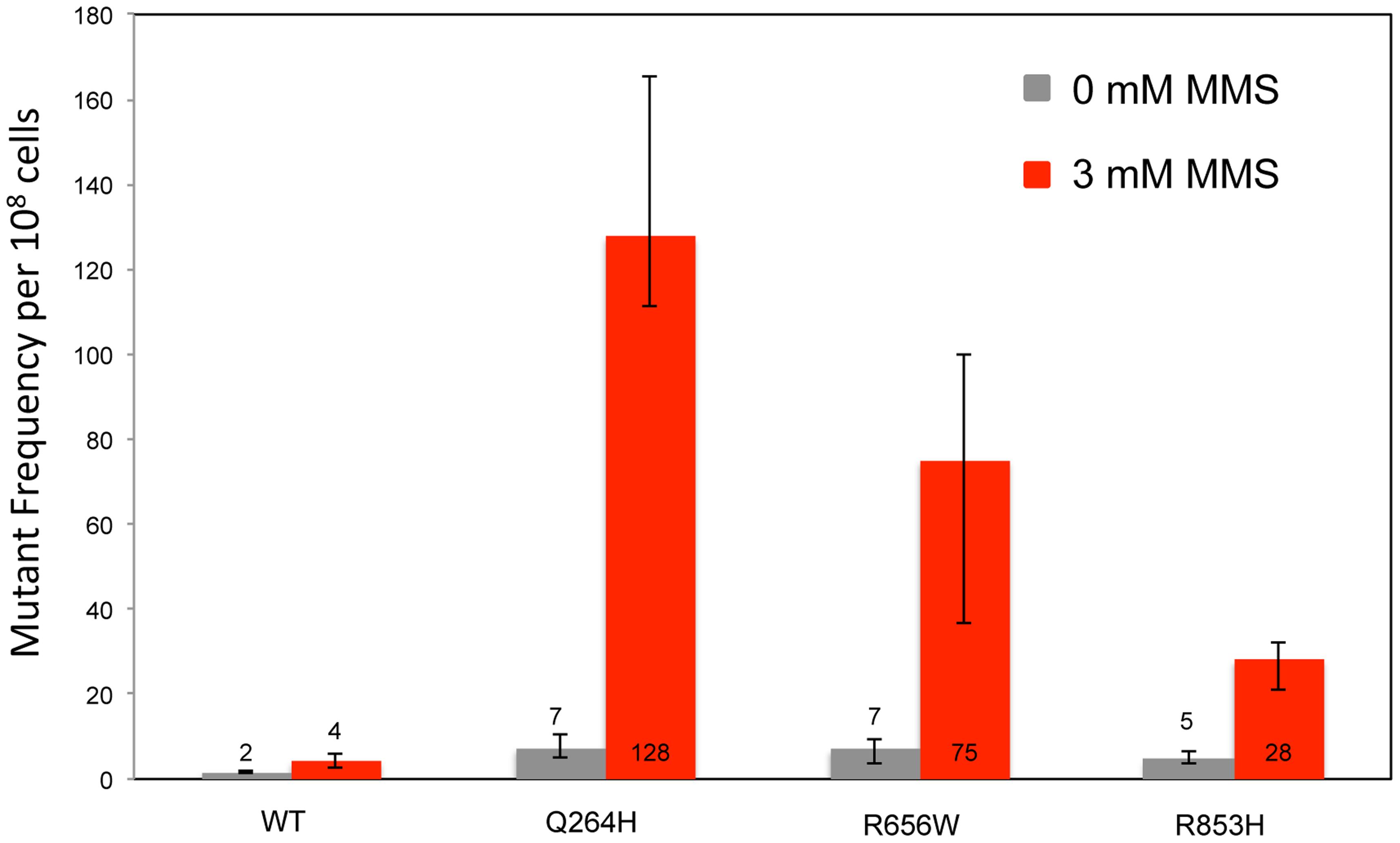 Methyl methanesulfonate exposure increases mtDNA point mutagenesis in heteroallelic strains encoding Mip1 variants.