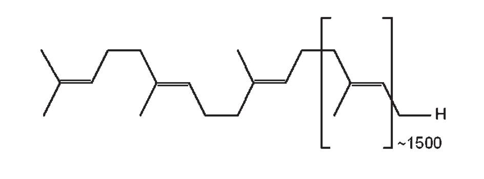 Chemický vzorec gutaperče; trans-1,4-polyizoprén [4]