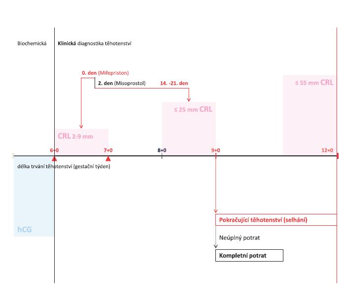 Schéma 1 Umělé ukončení těhotenství Farmakologickou metodou, nepřesahuje-li těhotenství 7 týdnů – diagnostika těhotenství a management výkonu podle délky trvání těhotenství (gestačního stáří)