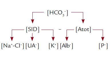 Schéma 2. Klinicky významné faktory ovlivňující [S-HCO<sub>3</sub><sup>–</sup>]. SID je determinována rozdílem silných iontů (v rámci zjednodušení zanedbáváme ionty Ca<sup>2+</sup> a Mg<sup>2+</sup>). [Atot] je součtem aniontů slabých neprchavých kyselin, tj. nábojem neseným albuminem a anorganickým fosfátem.