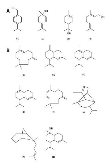 Monoterpenické alkoholy obsažené v silici listů R. hirta (A) 1 – p-menthadien-7-ol, 2 – linalool, 3 – terpineol, 4 – geraniol Seskviterpenické sloučeniny obsažené v silici listů R. hirta (B) Seskviterpenické uhlovodíky (sloučeniny 1–7): 1 – karyofylen, γ –∂δ-kadinen, 3 – δ-kadinen, 4 – α-muurolen, 5 – α-humulen, 6 – α-kopaen, 7 – α-trans-ß-bergamoten Seskviterpenické alkoholy: 8 – torreyol