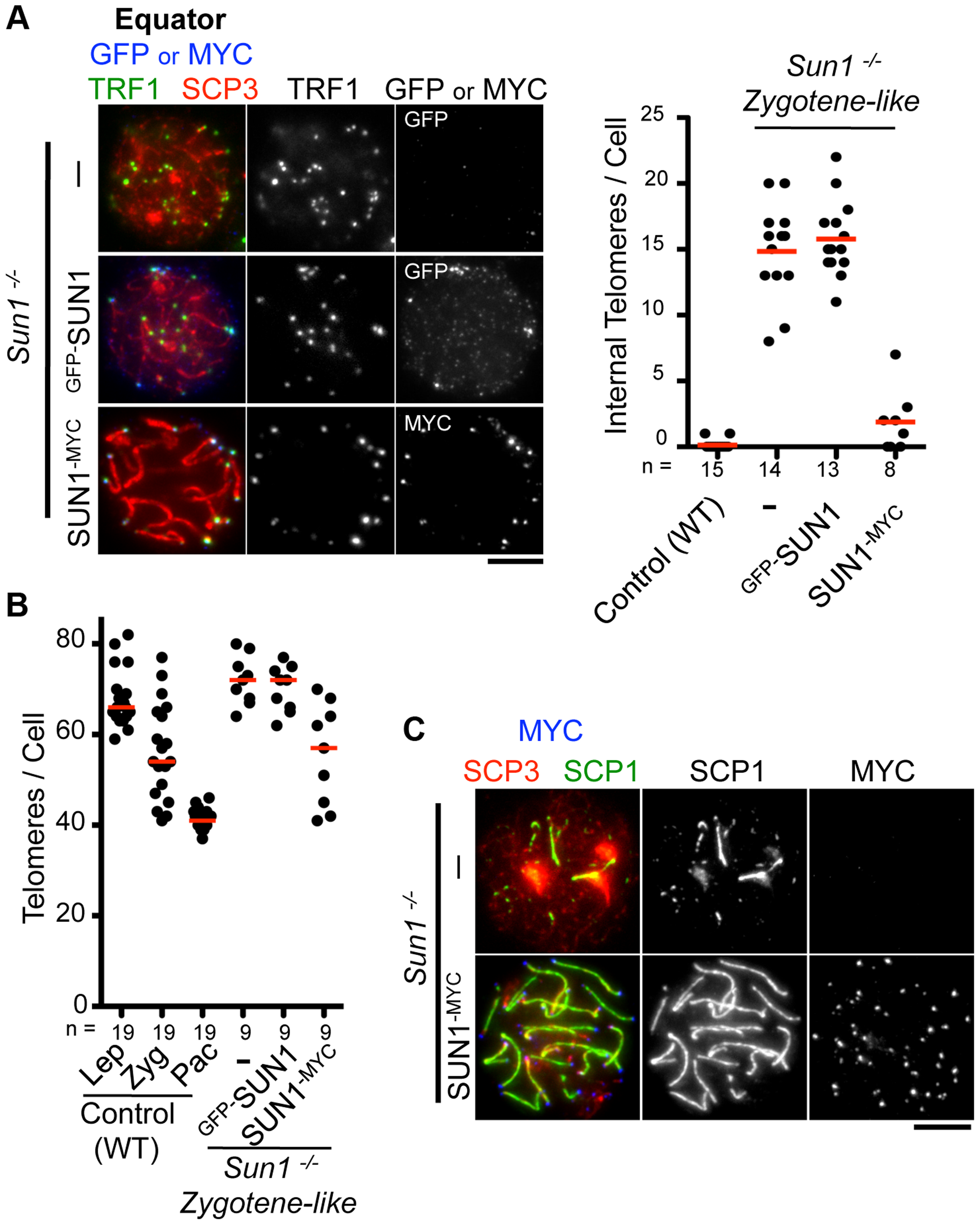 Complementation assay by <i>in vivo</i> EPs.