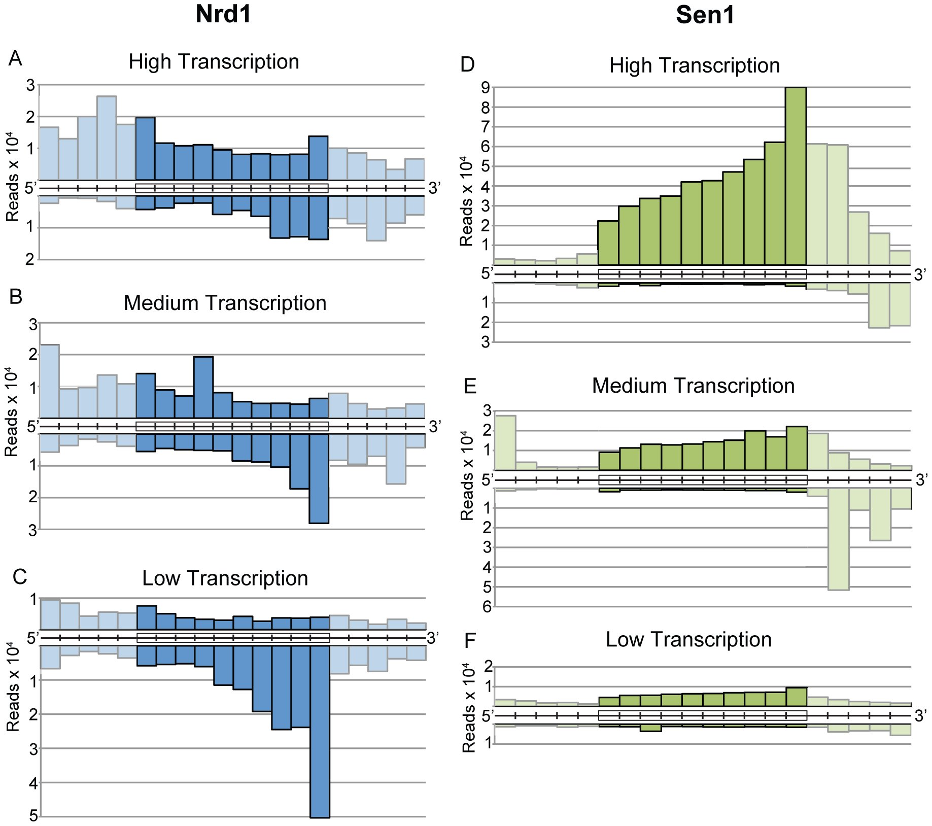 Gene-averaged positive and negative strand Nrd1 and Sen1 cross-linked reads on genes ranked by expression level.