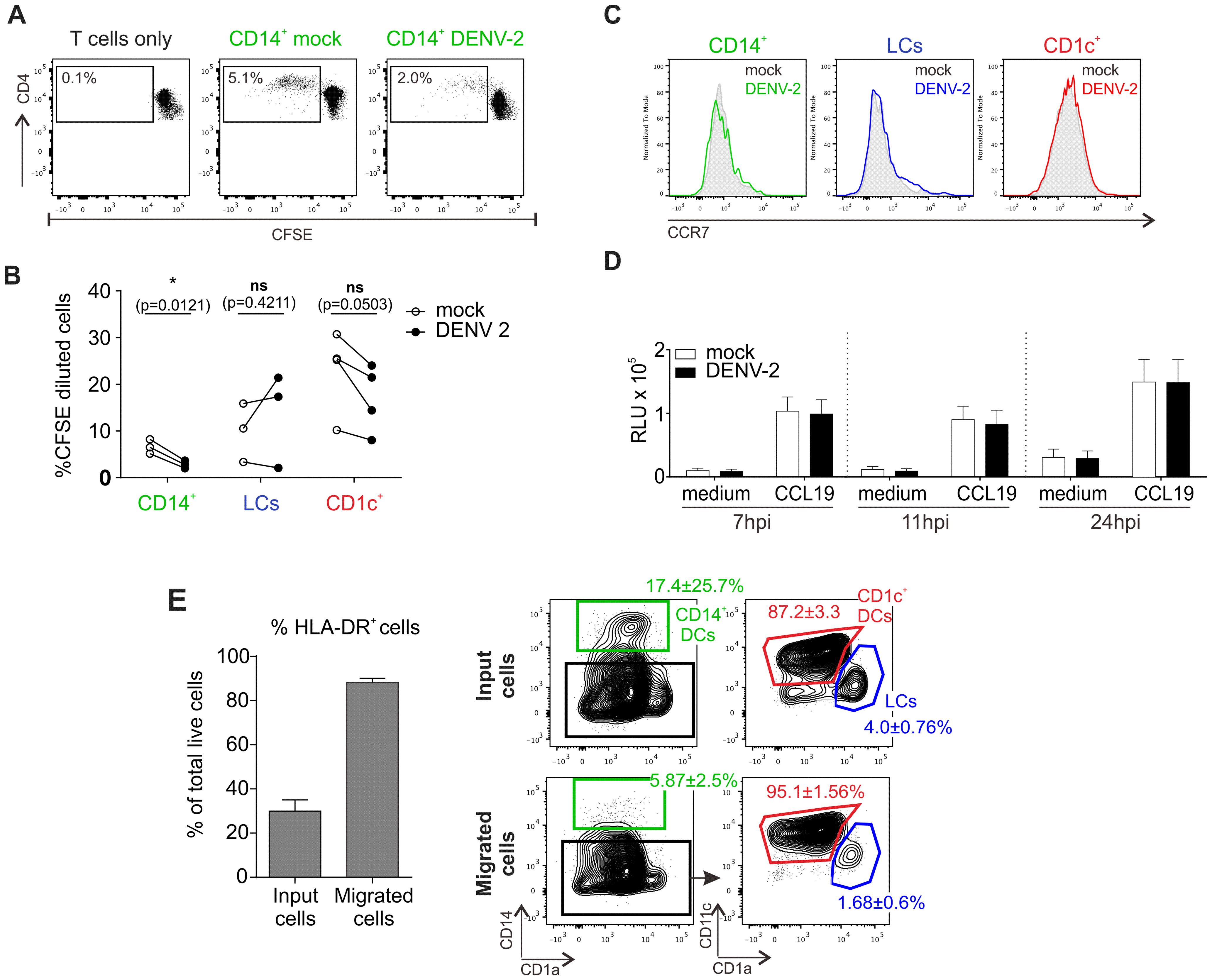 T cell stimulation capacity of DENV-exposed DC subsets and their migratory response towards the chemokine CCL19.