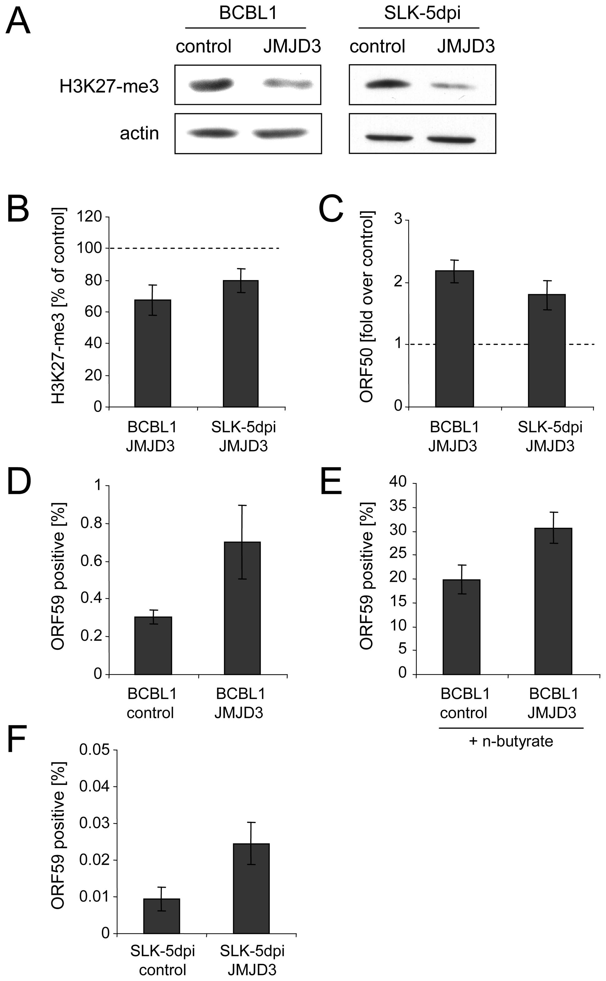 Consequences of JMJD3 expression in BCBL1 and <i>de novo</i> infected SLK cells.