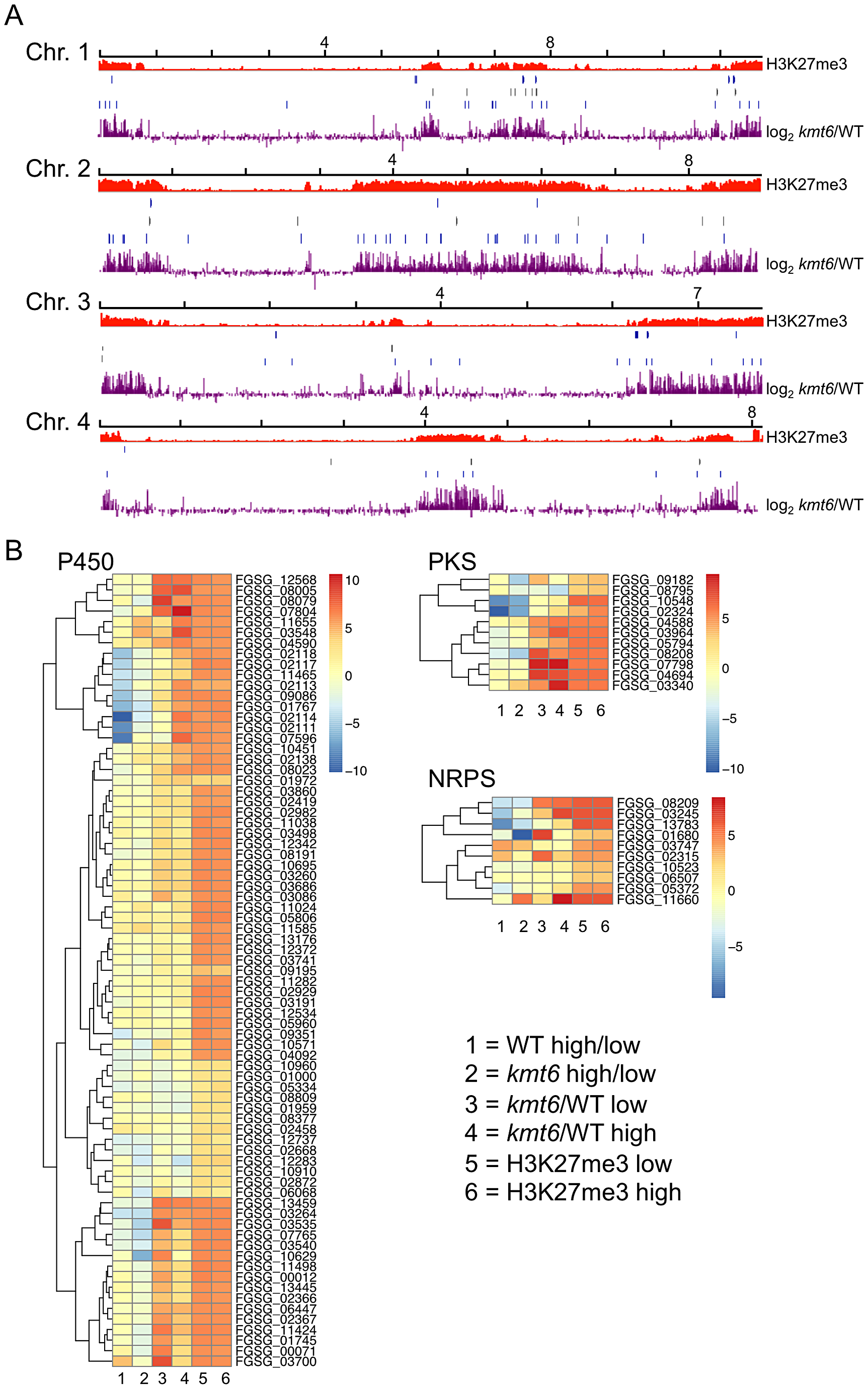 Genes involved in secondary metabolism are found in regions of H3K27me3, but not all are induced by mutation of <i>kmt6</i>.