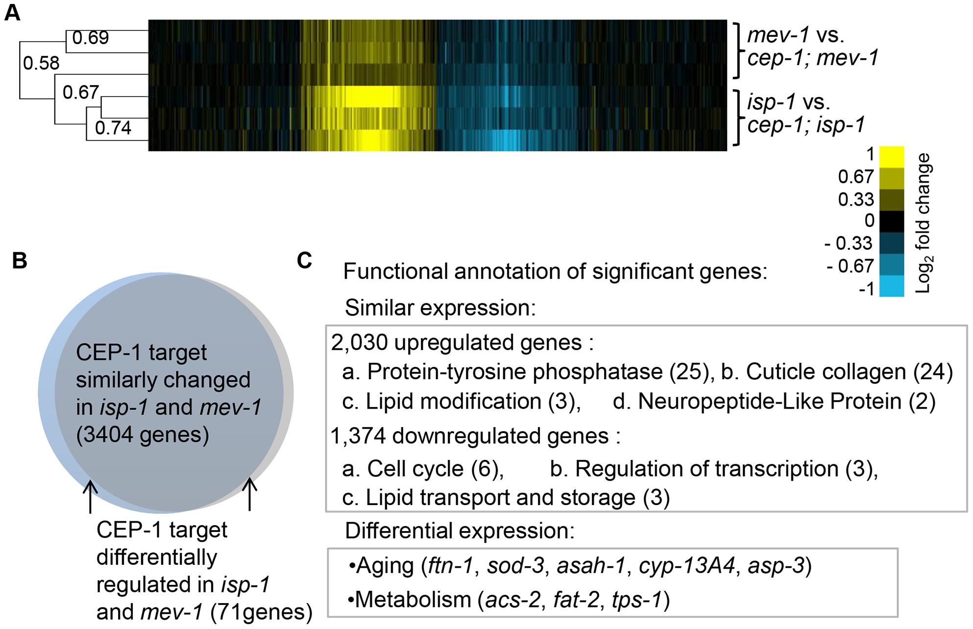 CEP-1-regulated transcriptomes in <i>isp-1</i> and <i>mev-1</i> mutants.