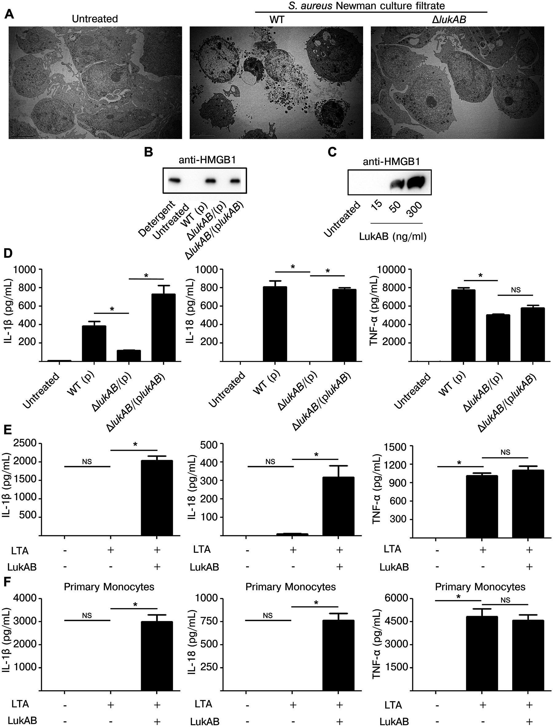 LukAB induces necrotic cell death and secretion of pro-inflammatory cytokines IL-1β and IL-18.