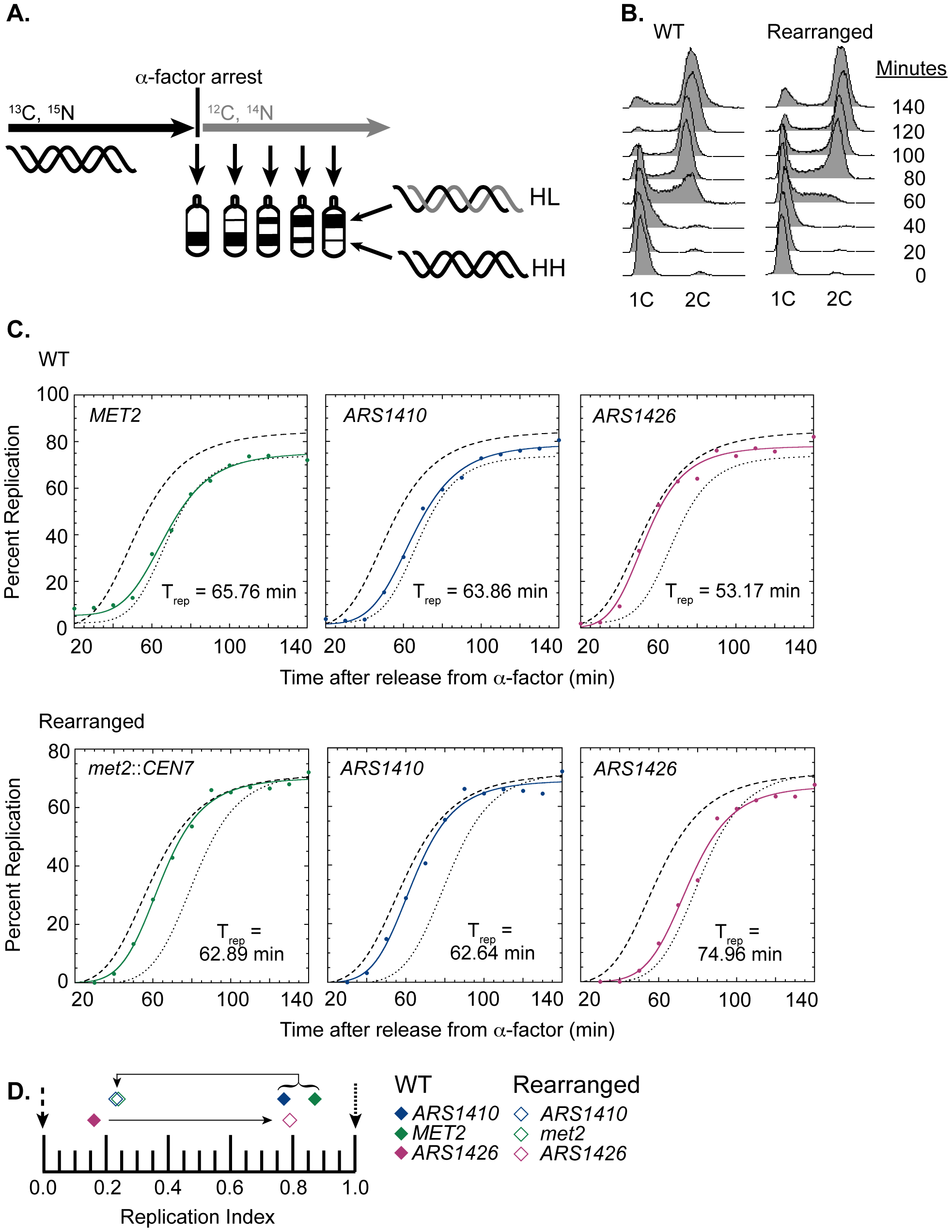 Replication time of native and relocated centromeres on chromosome XIV.