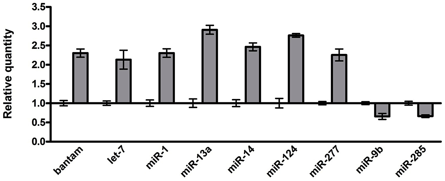 Identification of the miRNAs with altered expression in the brains of an FXTAS <i>Drosophila</i> model.