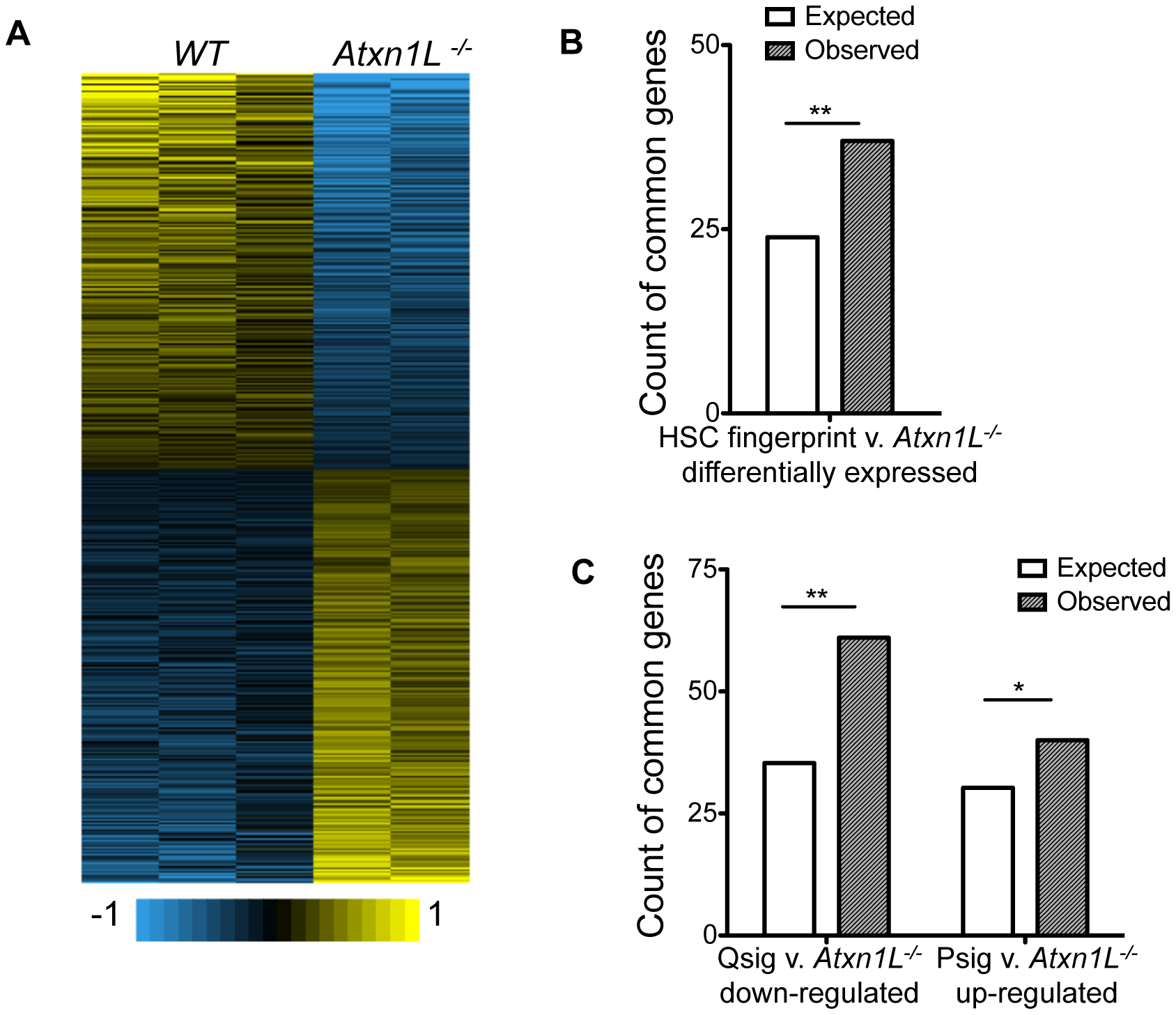 <i>Atxn1L<sup>−/−</sup></i> HSCs are enriched for expression of HSC-specific genes and depleted for quiescence-associated genes.