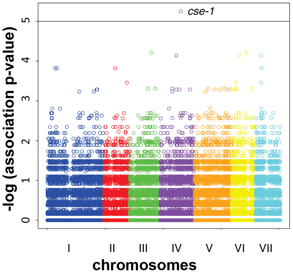 Genome-wide association of germling communication frequency on the seven chromosomes of <i>N. crassa</i>.