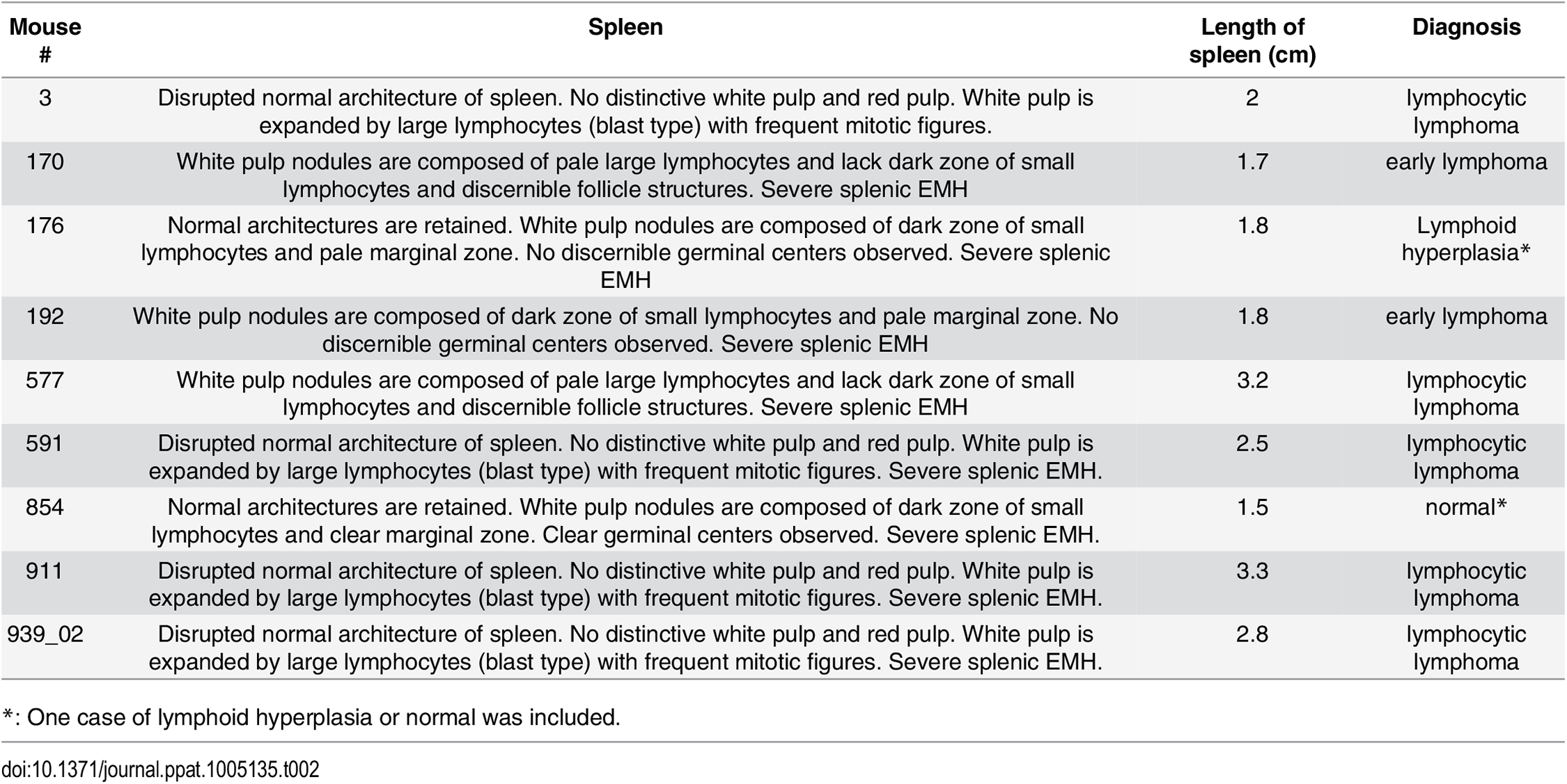 Pathology on spleen from Myc/latency mice diagnosed with lymphoma.