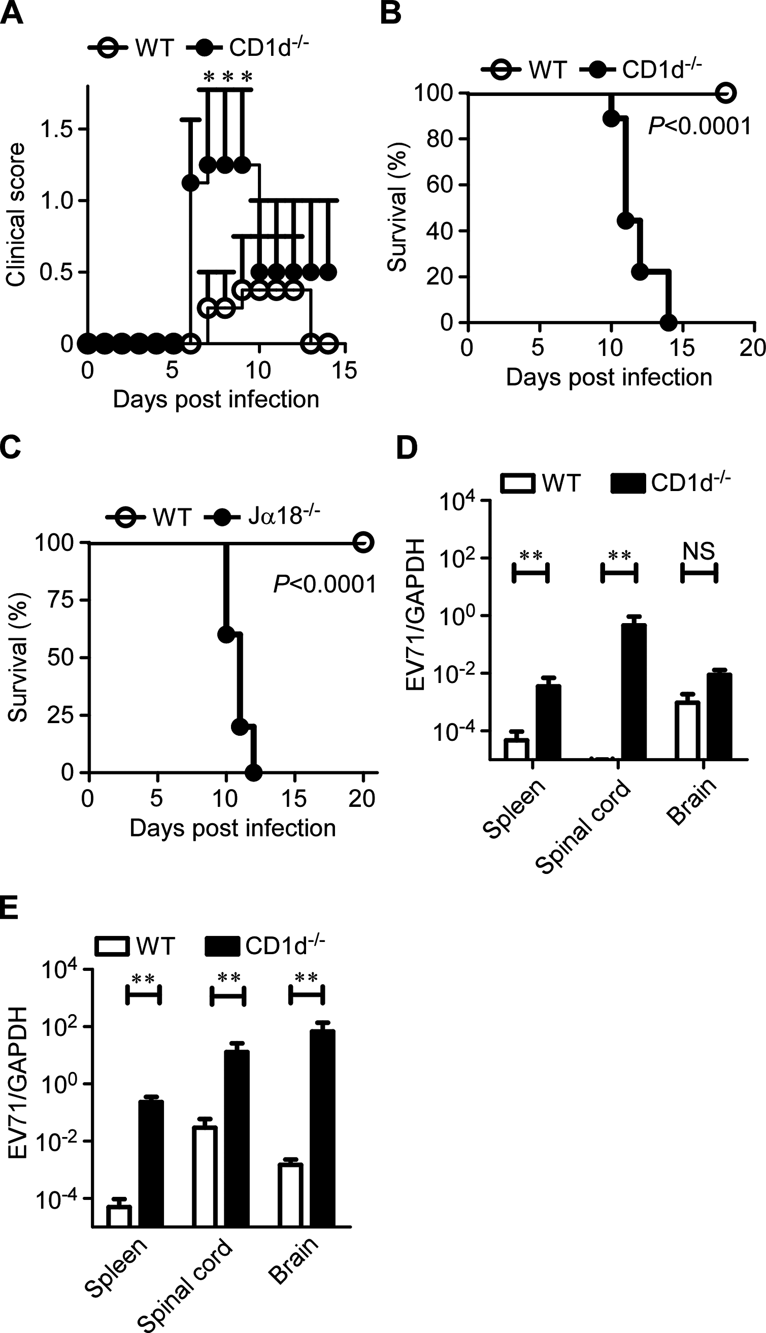 CD1d is essential for the protection of young mice from EV71 infection.