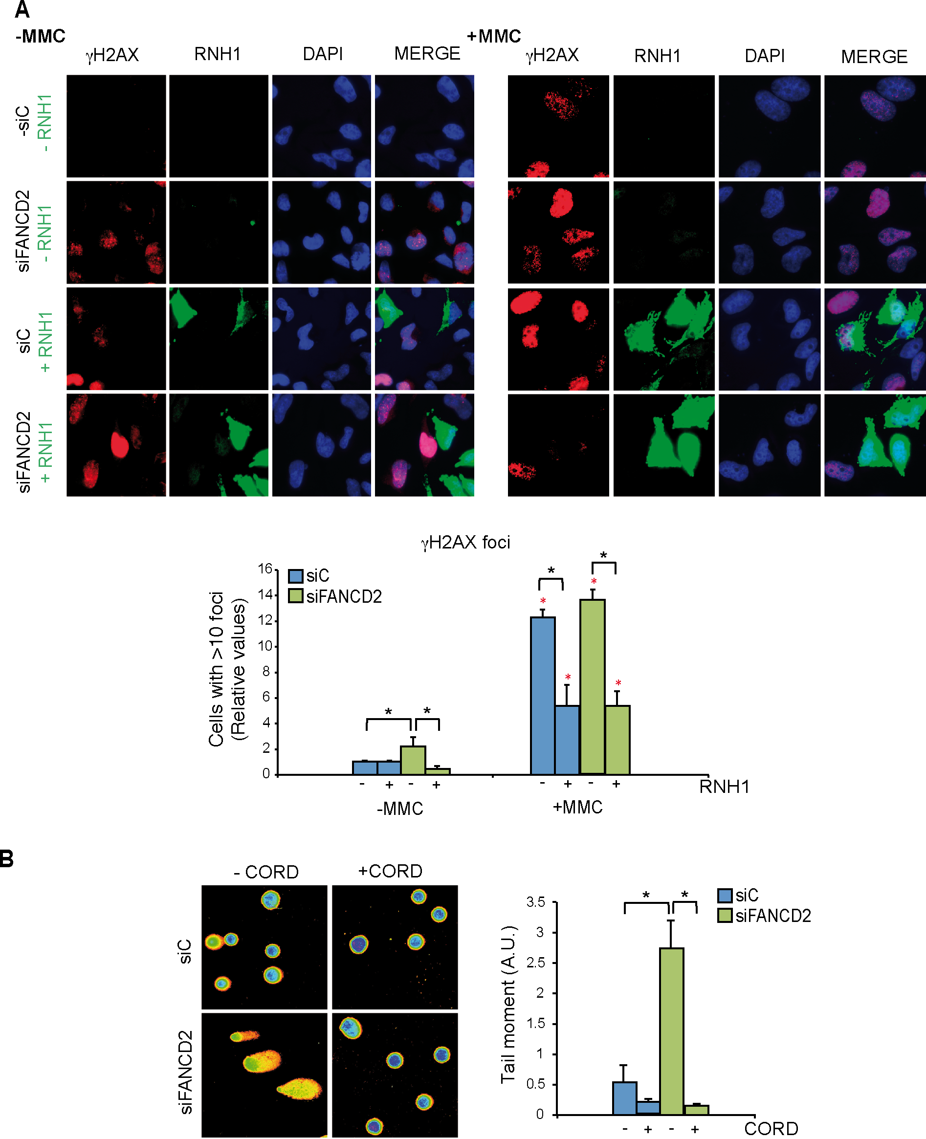 Genome instability in FANCD2-depleted human cells.
