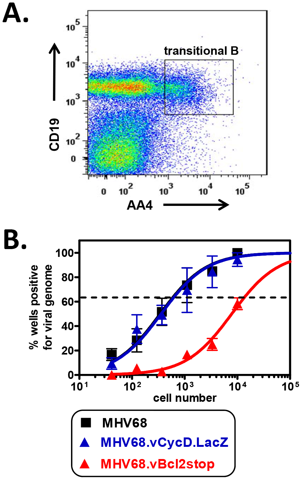 vBcl-2 is required for transitional B cell latency.