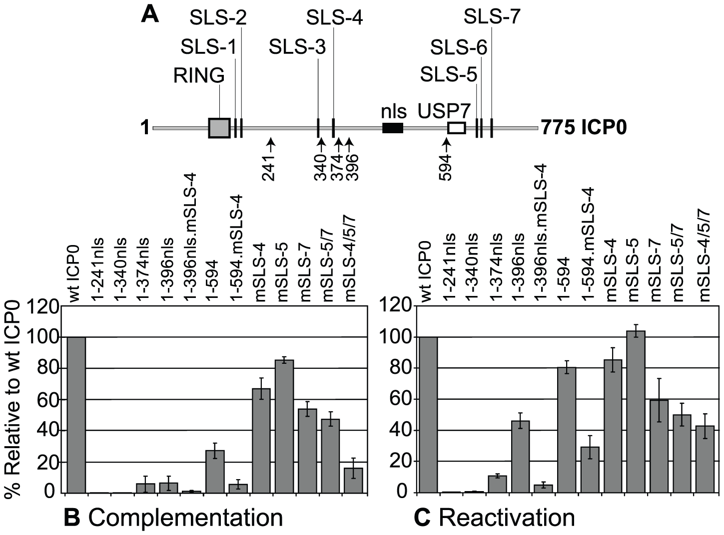 SLSs within ICP0 regulate its ability to complement and reactivate mutant HSV-1 viruses in cell culture.