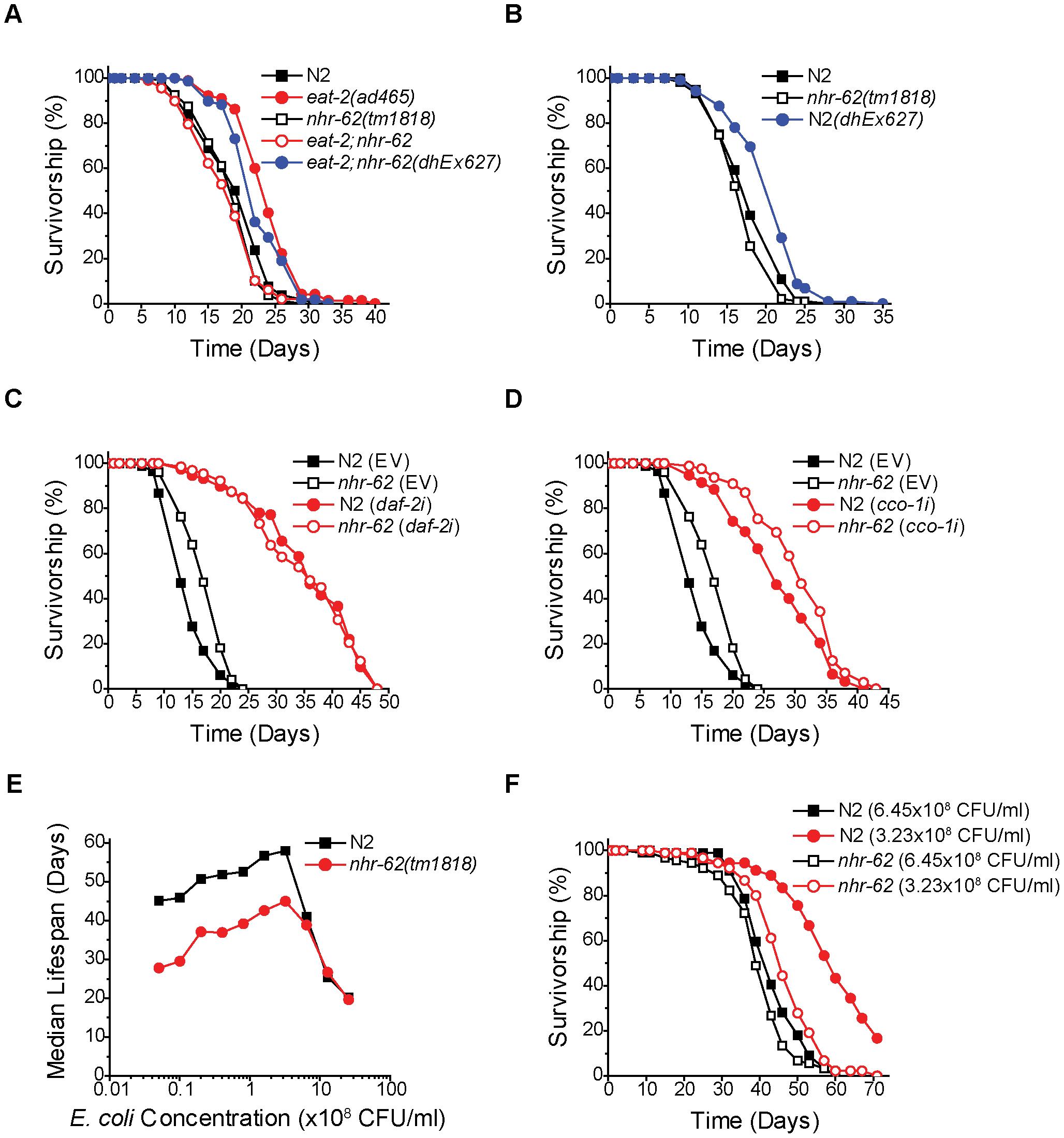 <i>nhr-62</i> specifically regulates DR-induced longevity.