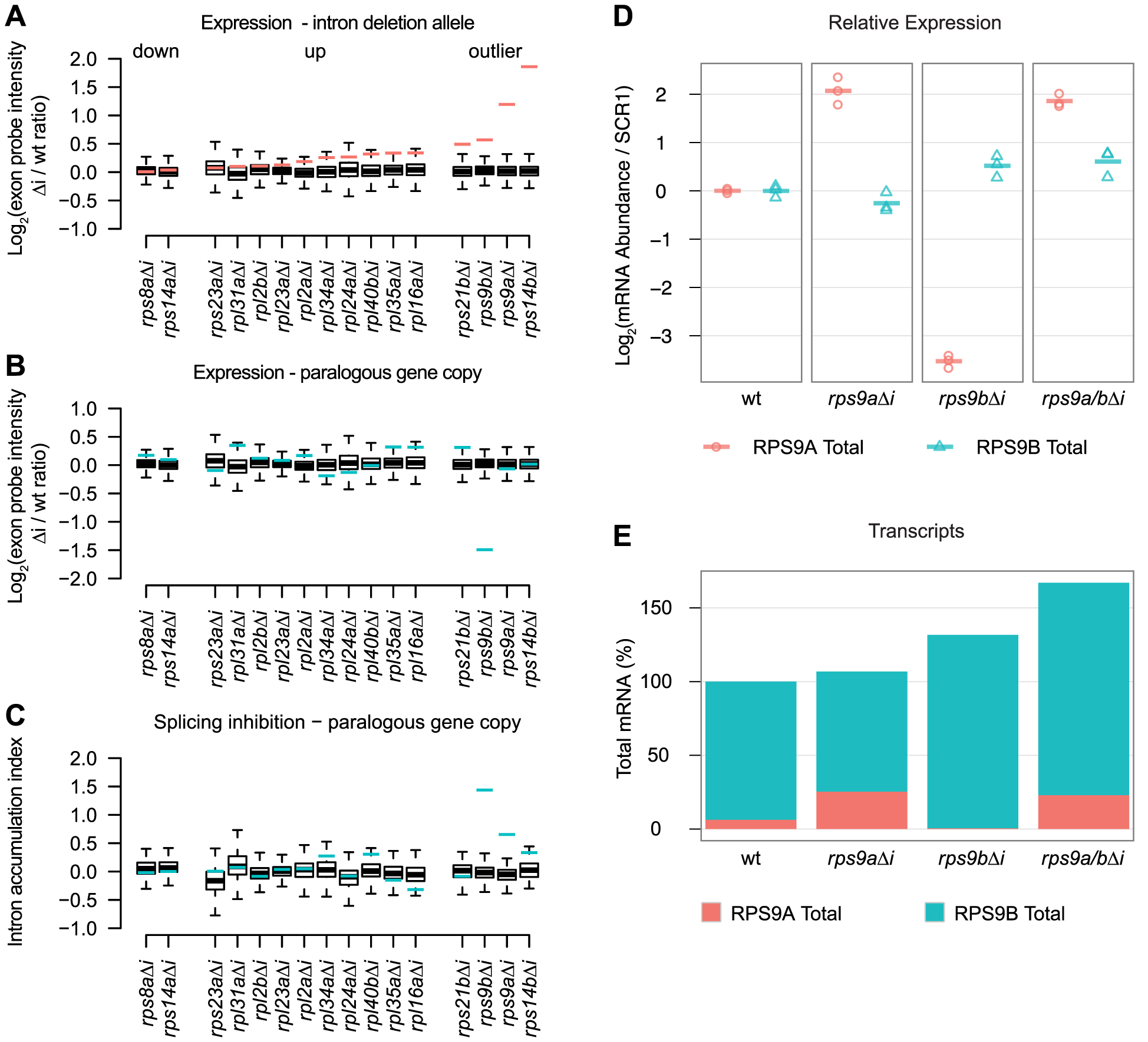 RPG intron deletions reveal gene-specific effects on steady-state mRNA levels.