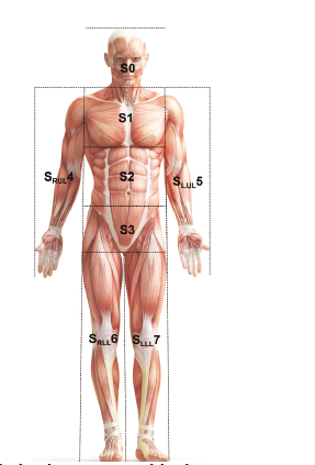 Fig. 1: Scheme of the layout of the sectors of the human body.