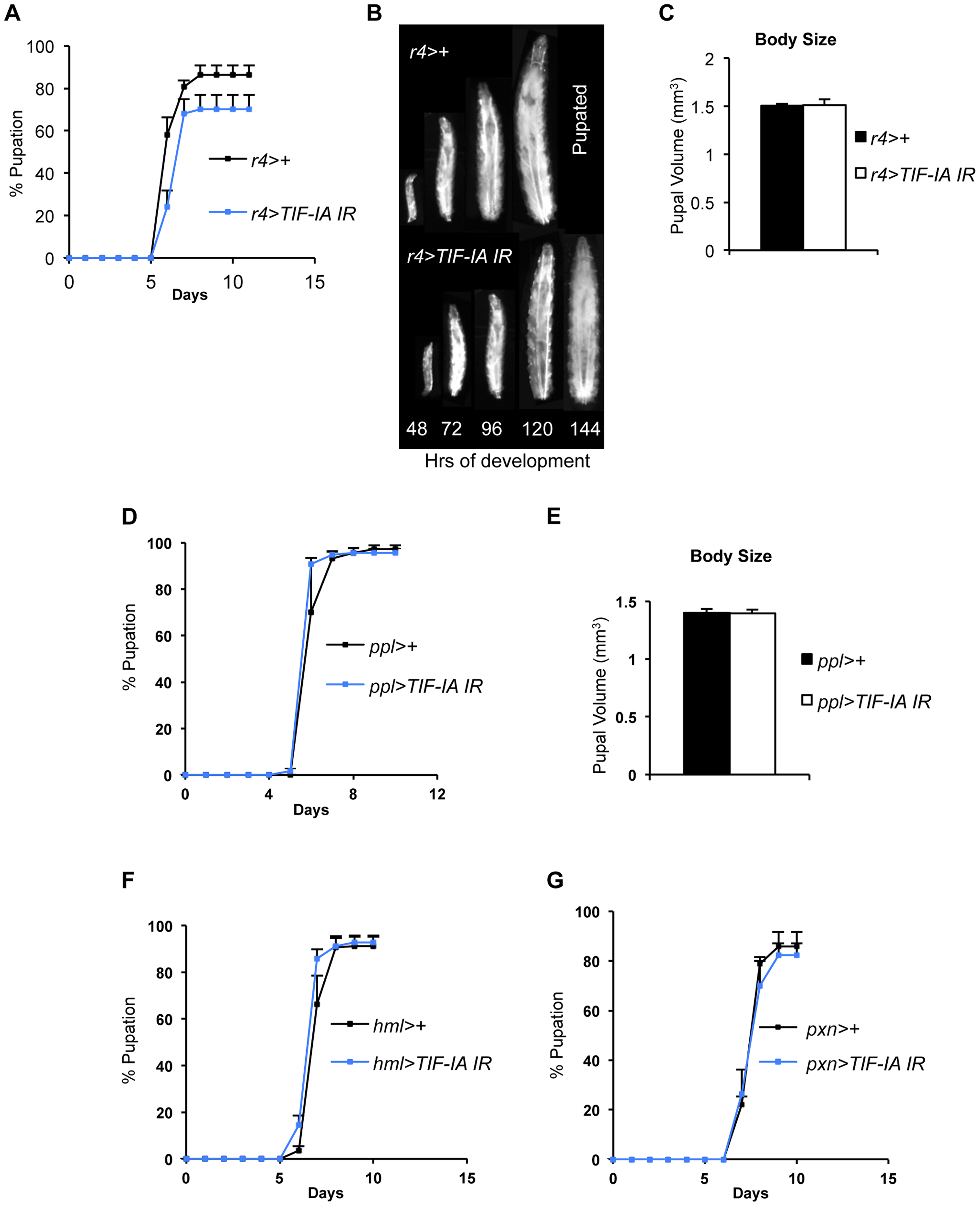 Fat-specific and lymph gland-specific TIF-IA inhibition has modest effects on growth and development.