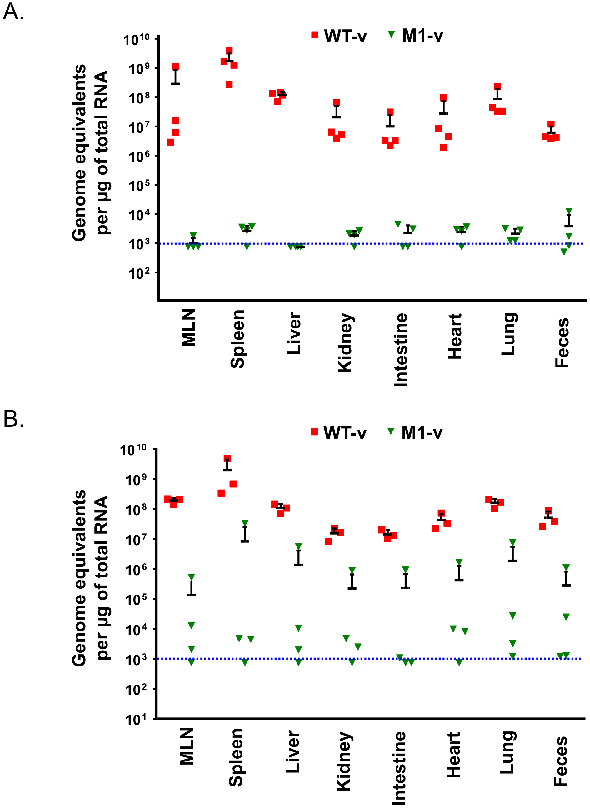 Viral RNA replication <i>in vivo</i> is reduced as a result of the loss of VF1 expression.