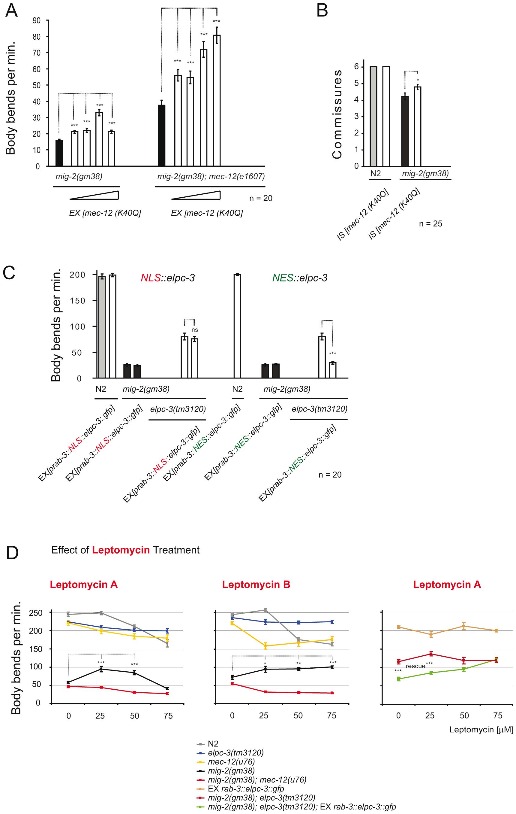 Effects of <i>mec-12</i>/<i>α-tubulin</i>[K40Q] and cytoplasmic requirement of ELPC-3.
