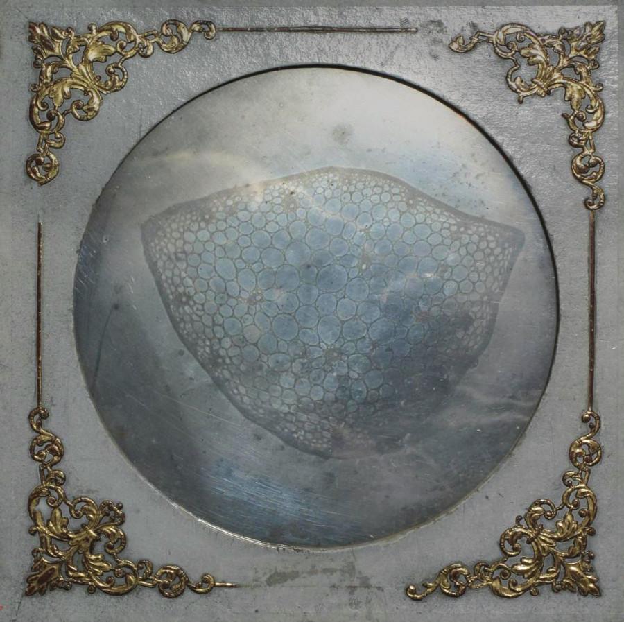 """Staškova mikrodaguerrotypie """"Řez stvolem rostliny"""" z r. 1840, průměr obrazu 148 mm (uložena v Národním technickém muzeu v Praze)."""