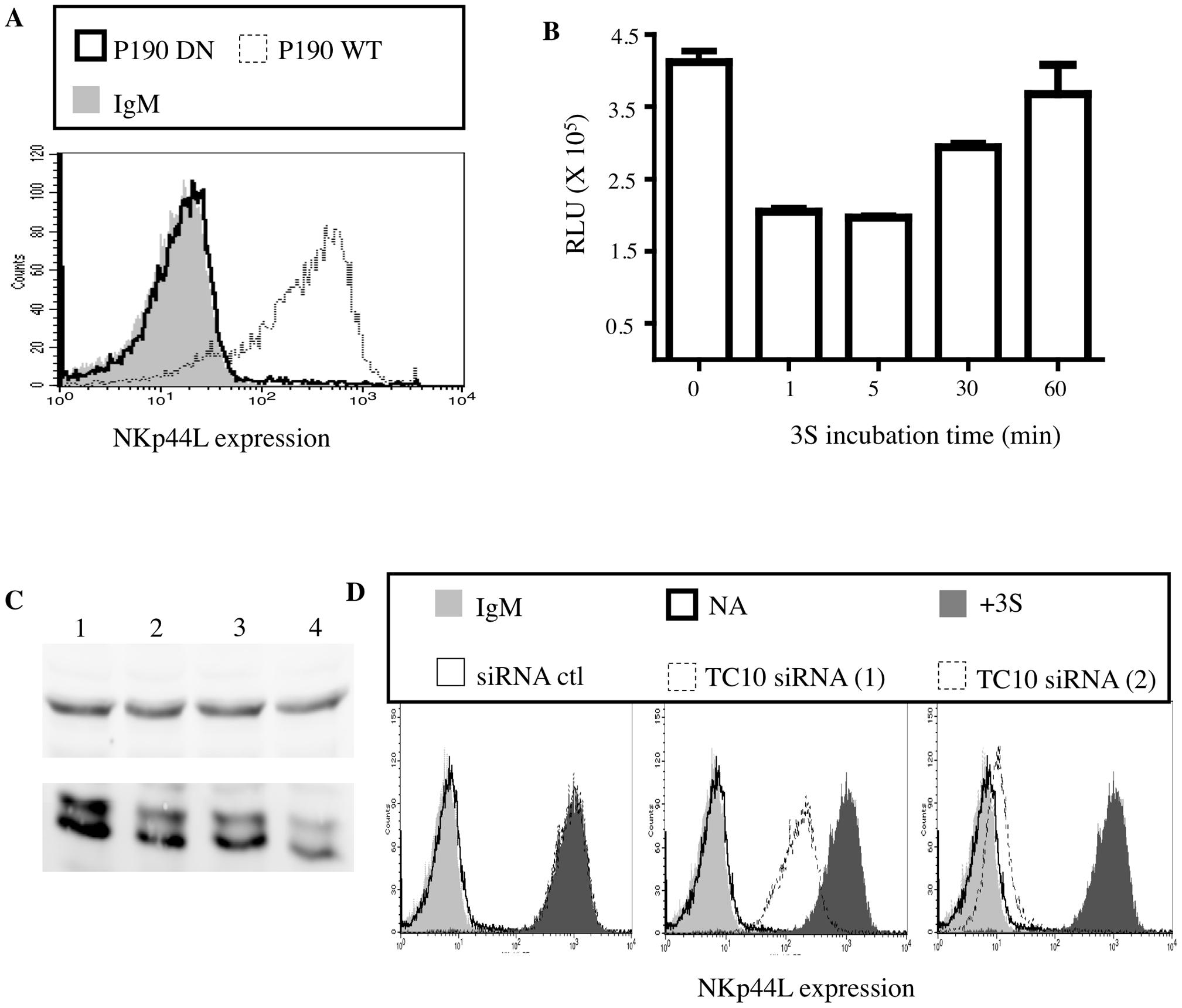 3S peptide stimulation downregulates Rho activity via p190 RhoGAP A.
