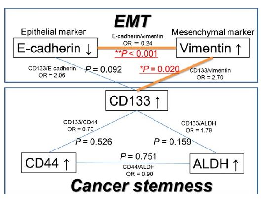 Figure 4. Association among EMT and CS markers. EMT, epithelial-mesenchymal transition; CS, cancer stemness; ALDH, aldehyde dehydrogenase; OR, odds ratio.
