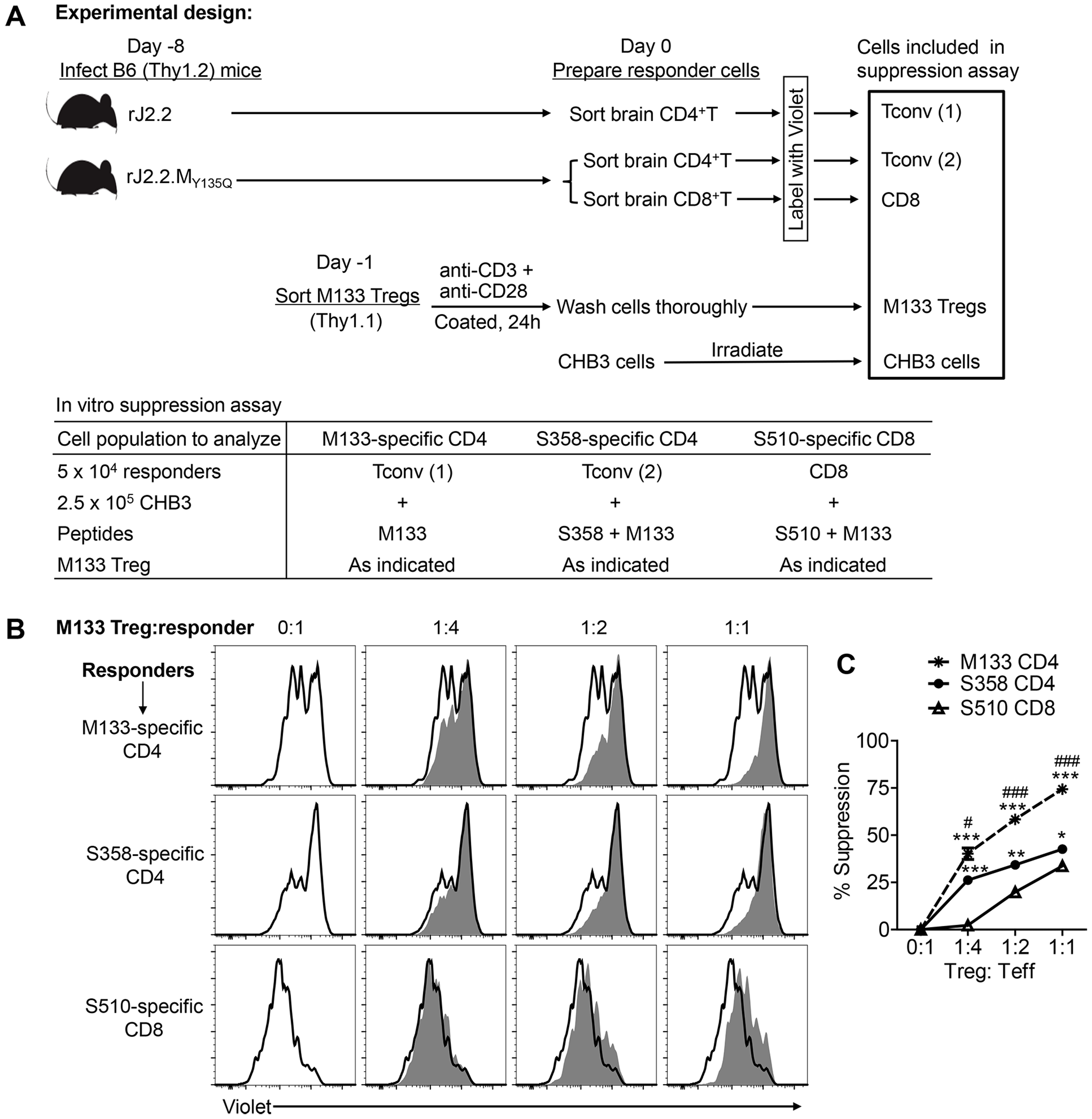 M133 Tregs preferentially inhibit proliferation of M133-specific Tconvs in an <i>in vitro</i> suppression assay.