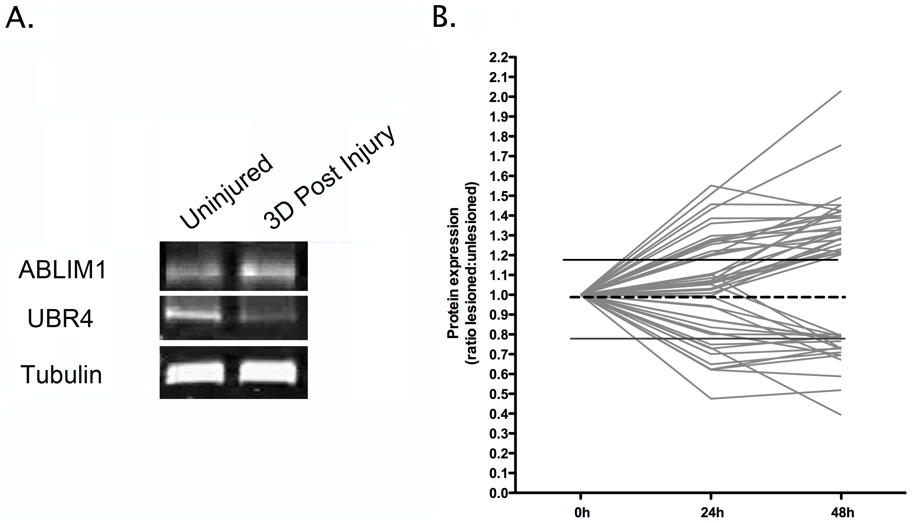 Temporal expression profiling identifies molecular changes occurring in synapse-enriched fractions from the striatum undergoing degeneration.